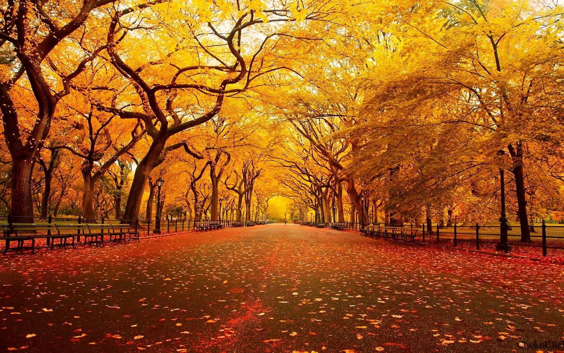 Fall foliage wallpaper for desktop 1920x1200 fall thanksgiving wallpapers wallpaper cave voltagebd Images