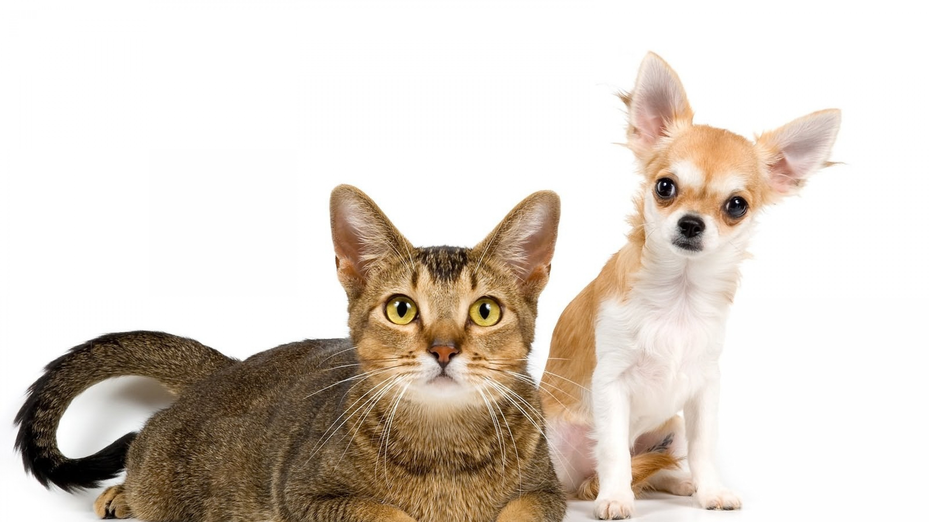 dog and cat pictures