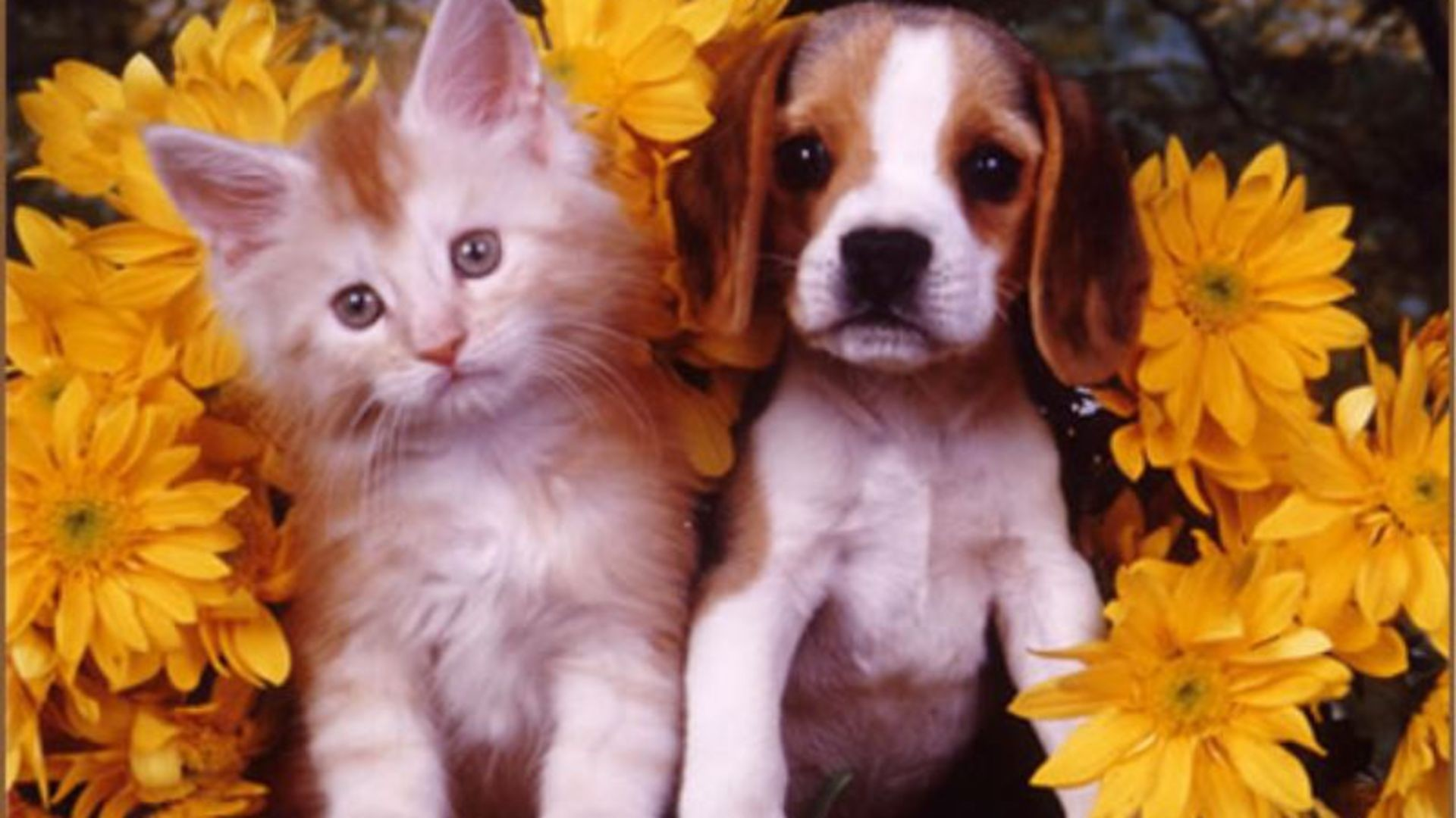 Puppies and Kittens Wallpaper ·â'
