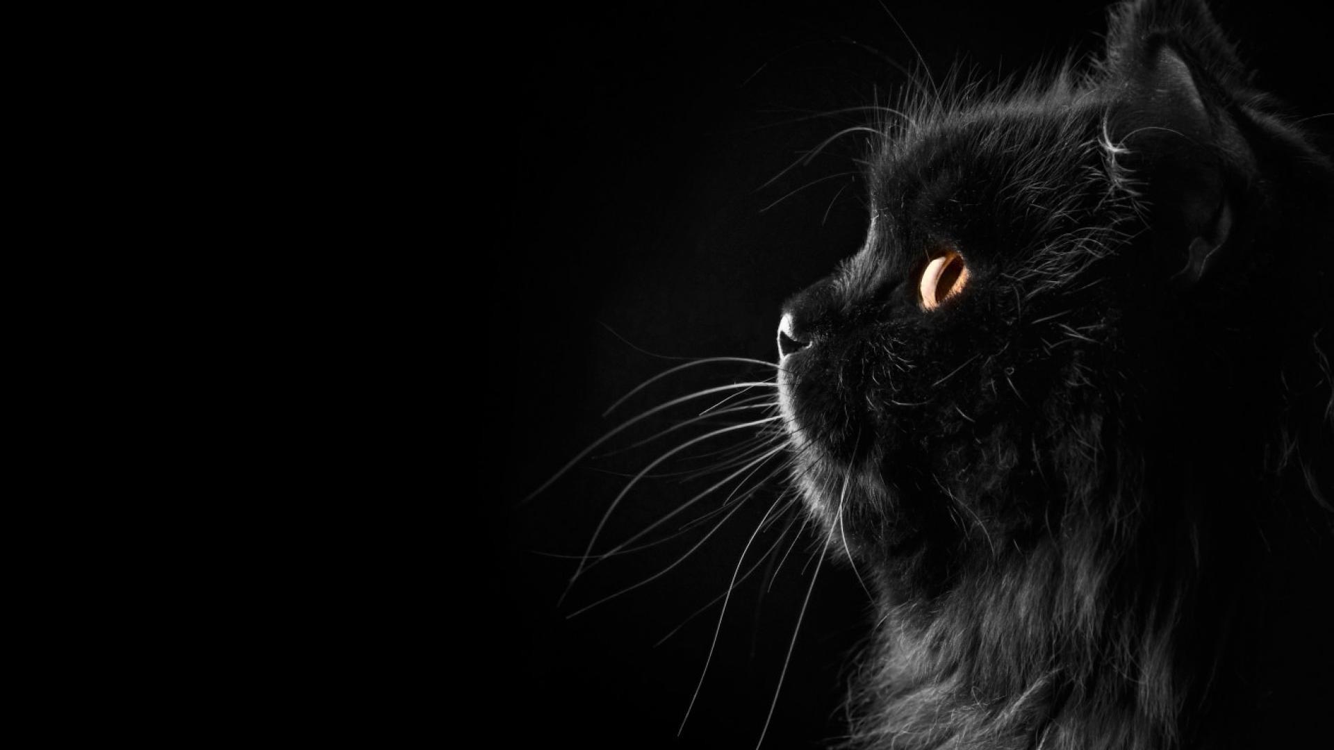 обои на рабочий стол черные кошки на черном фоне № 154862  скачать