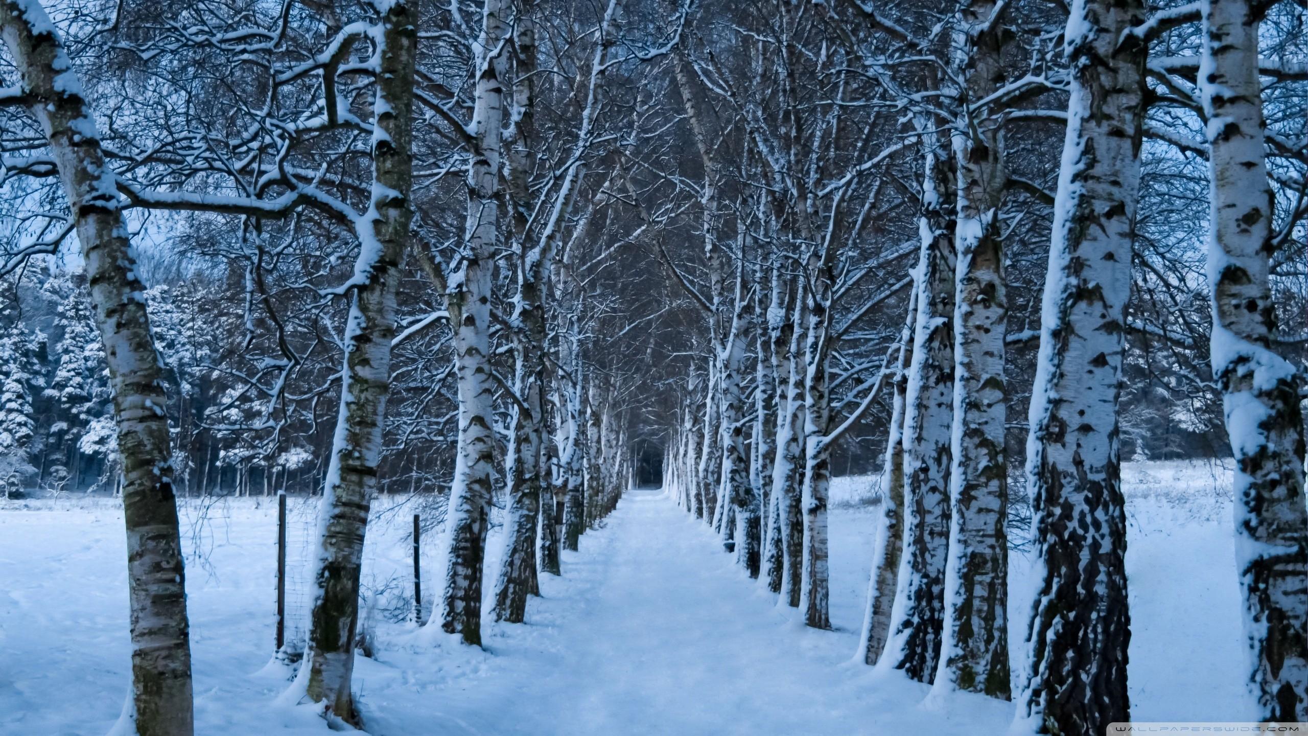 winter tree wallpaper 183��