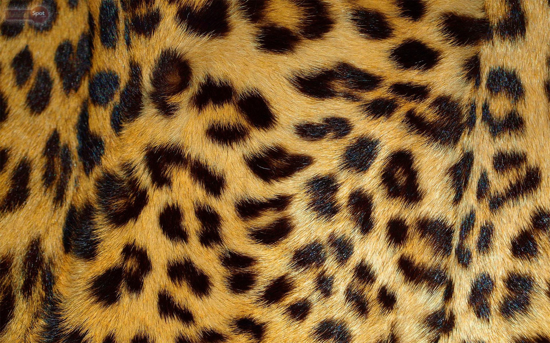 animal print desktop backgrounds 183��