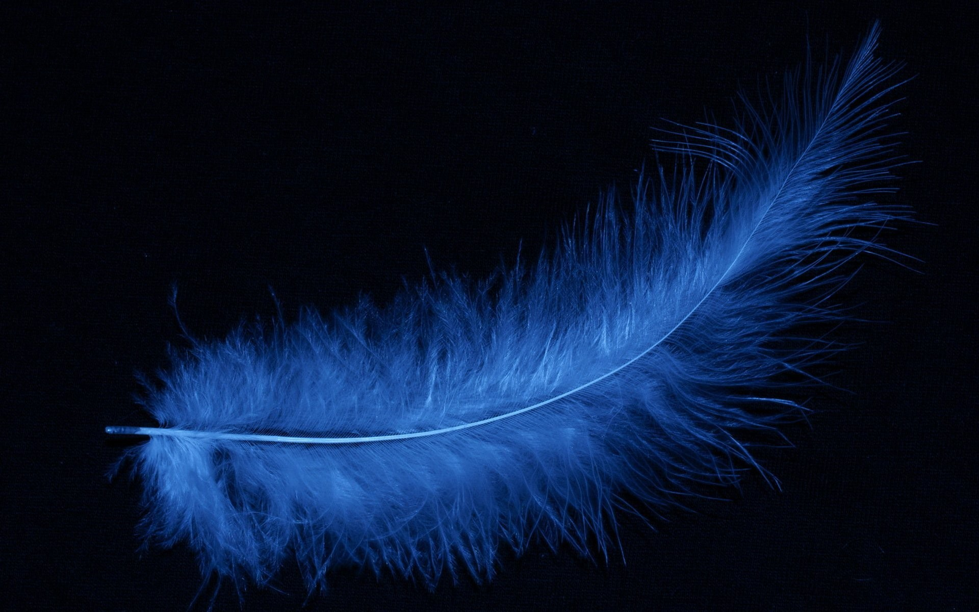 feather background 183�� download free amazing full hd