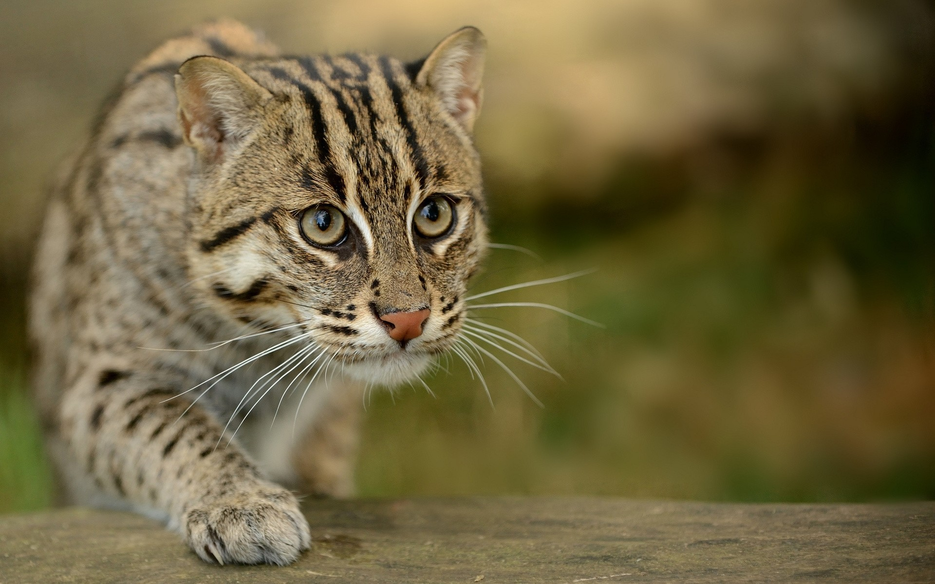 how to neutralise cat urine in soil