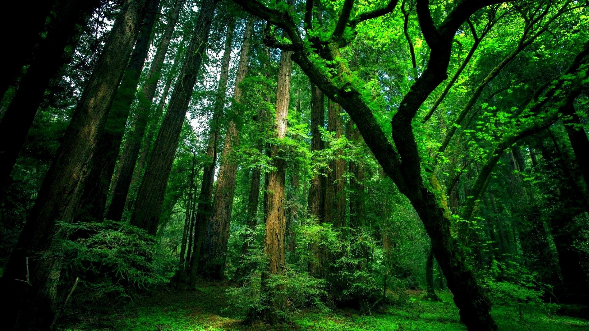 green forest background ·①, Powerpoint templates