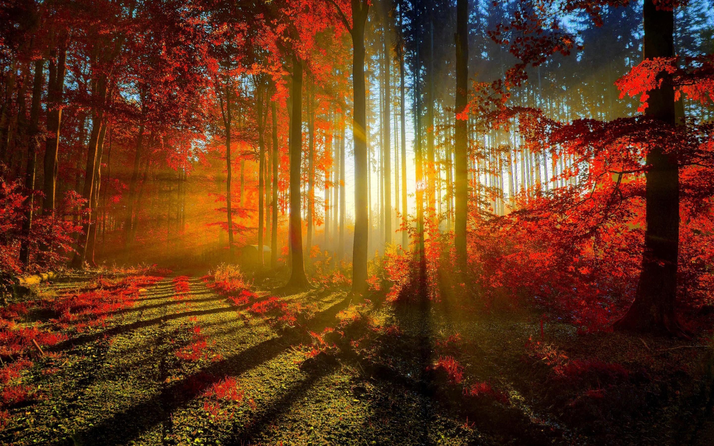природа рассвет деревья  № 1158299 бесплатно