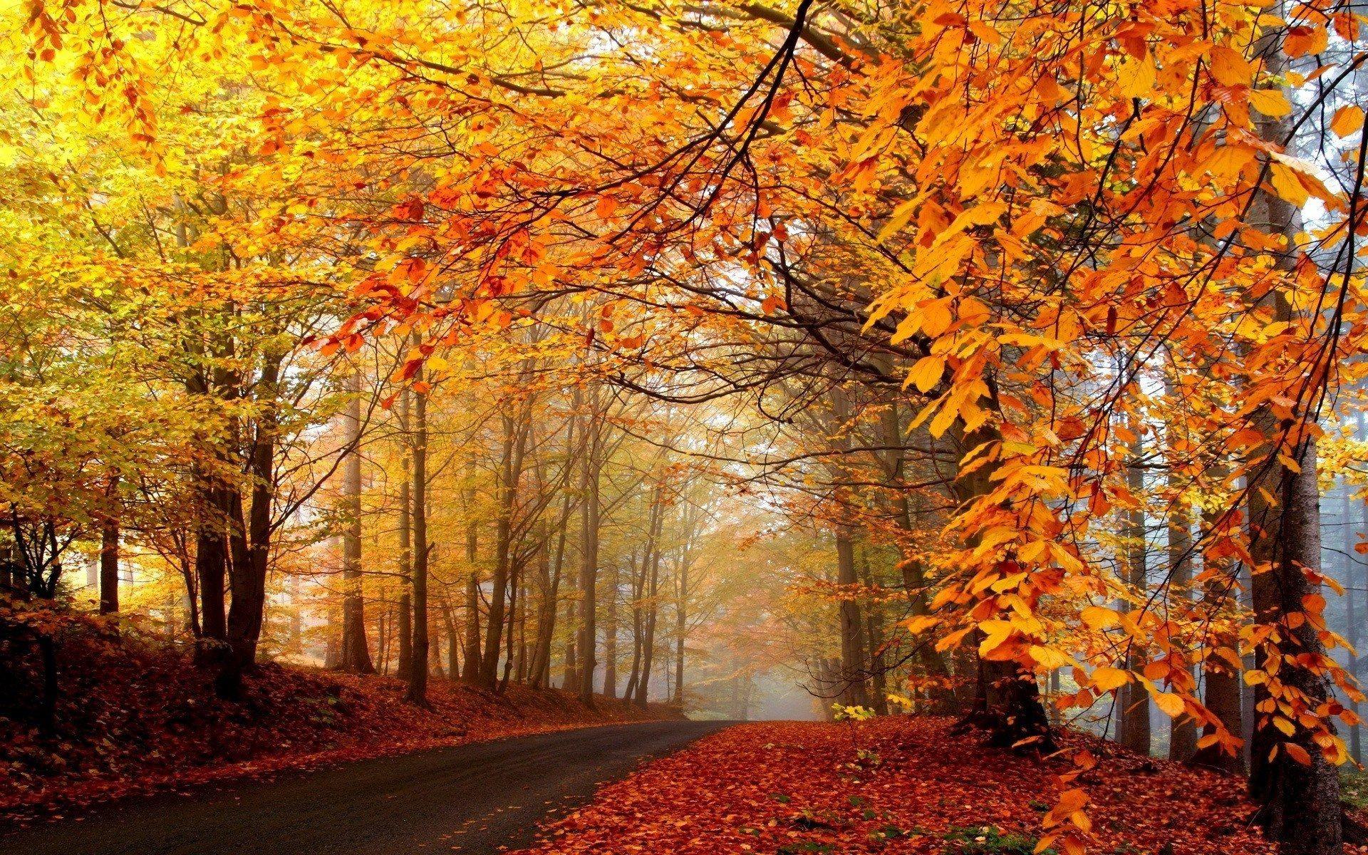 autumn scenes wallpaper ·①