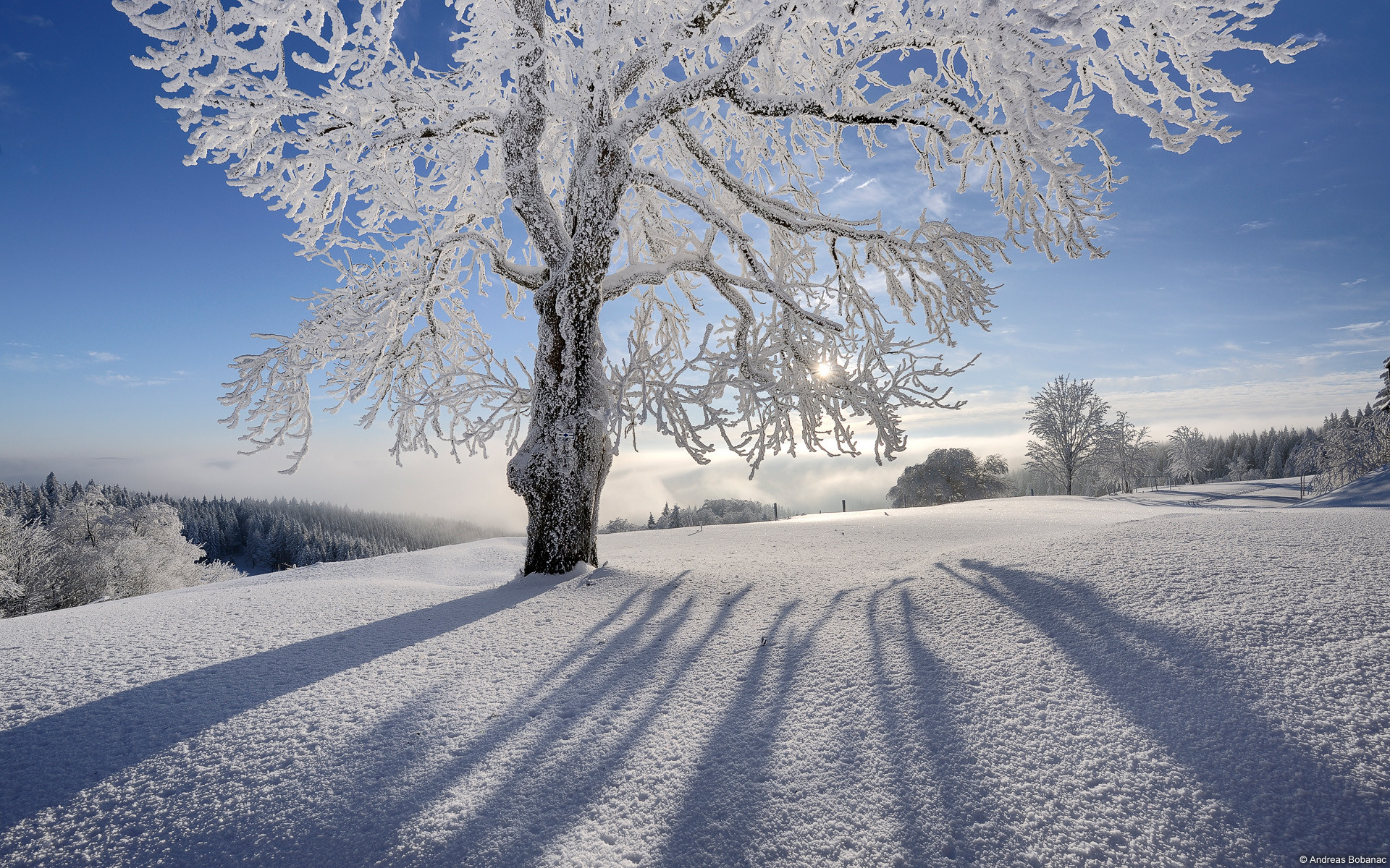 1920x1200 Explore And Share Winter Christmas Desktop Backgrounds