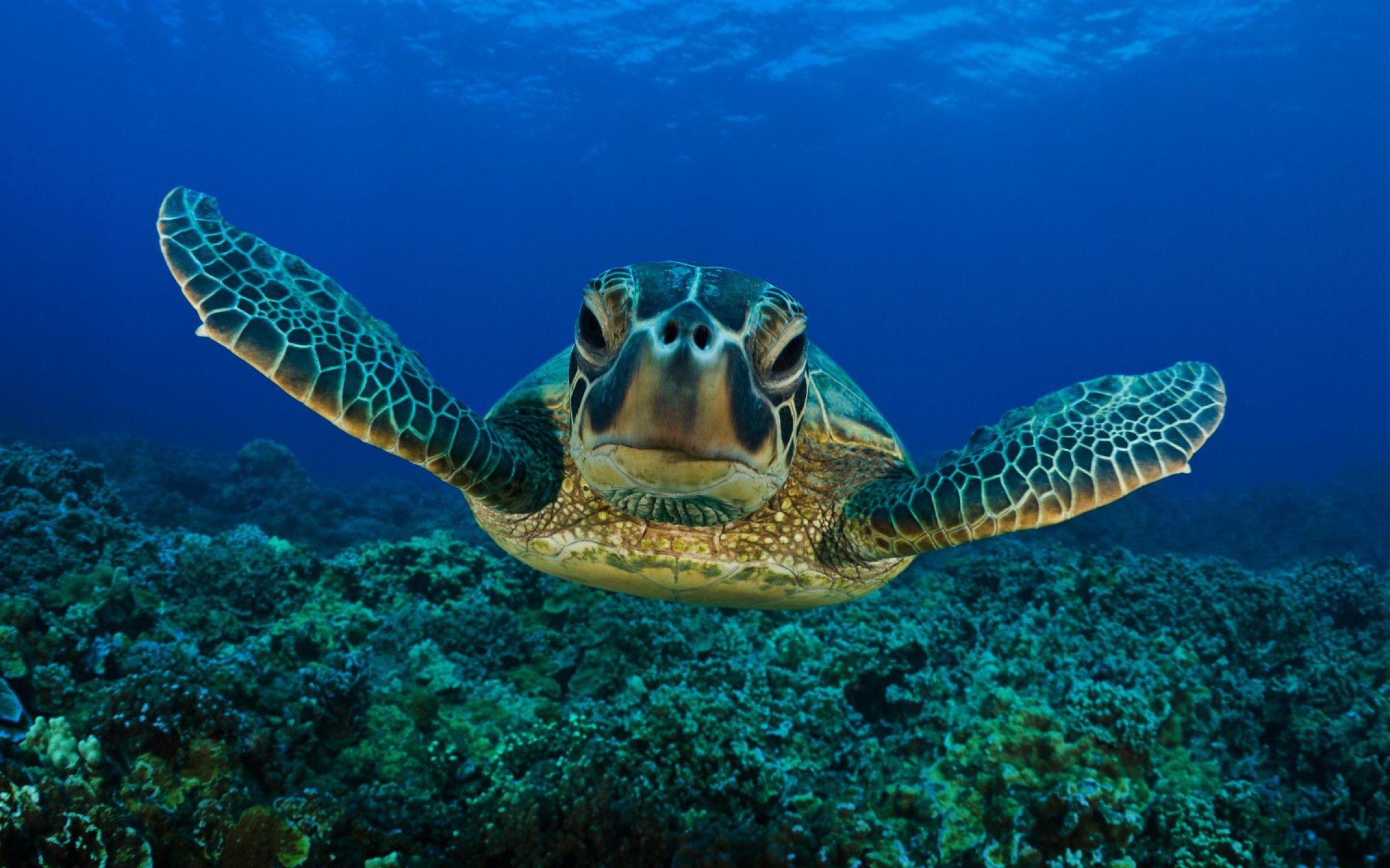 Cute Turtle Wallpaper ①