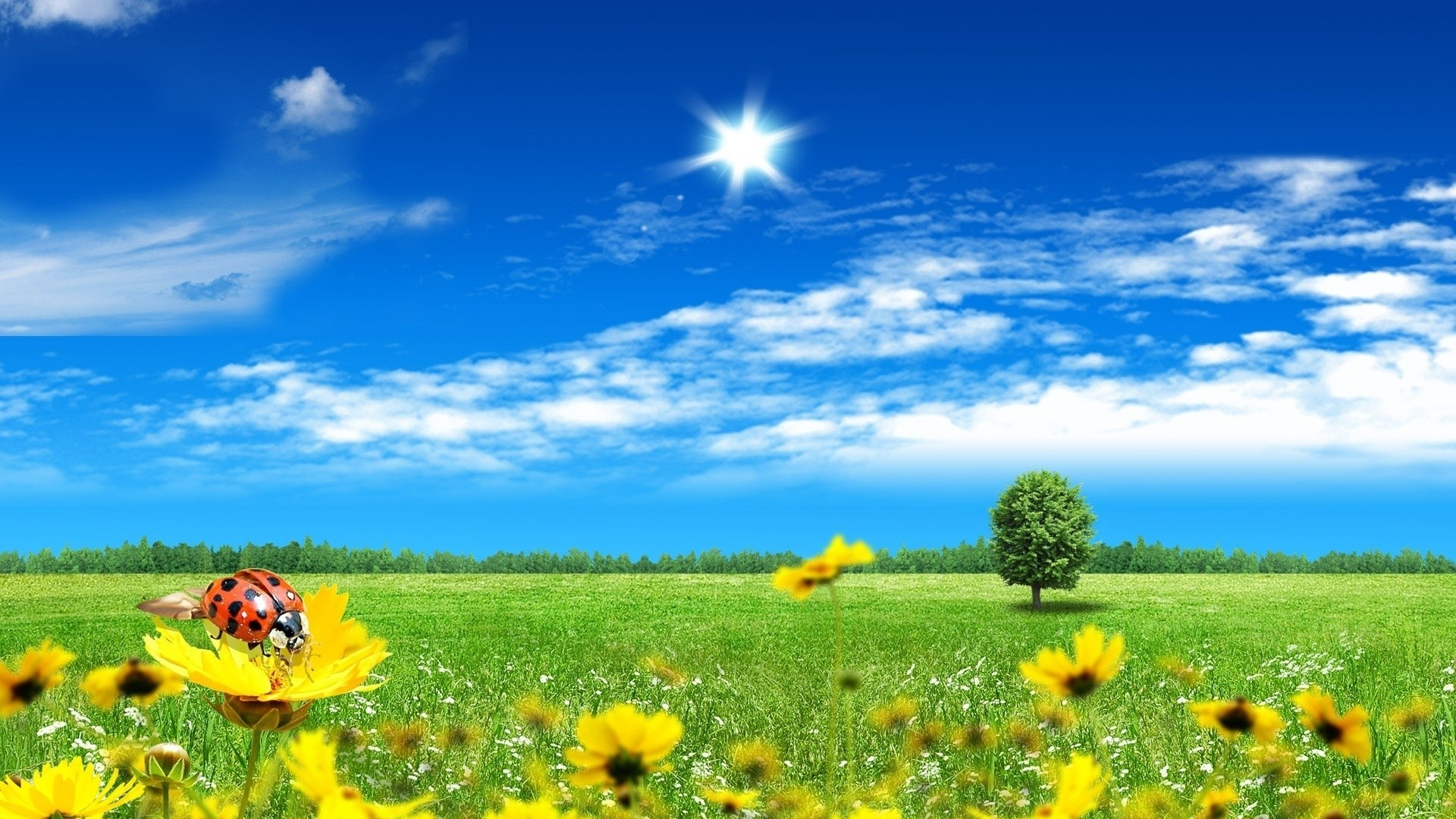beautiful nature wallpaper ·① download free full hd wallpapers for