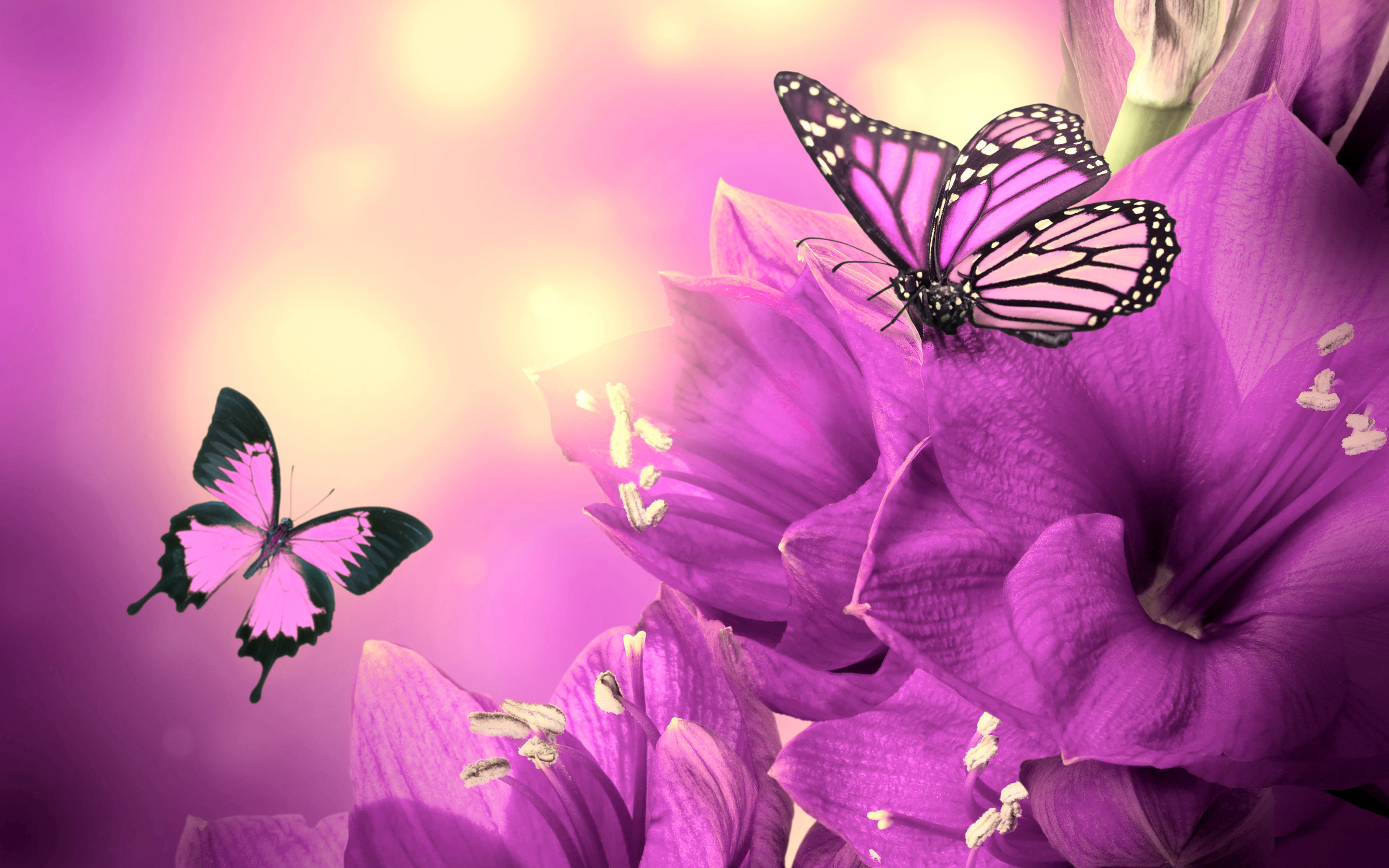 light purple flower - HD