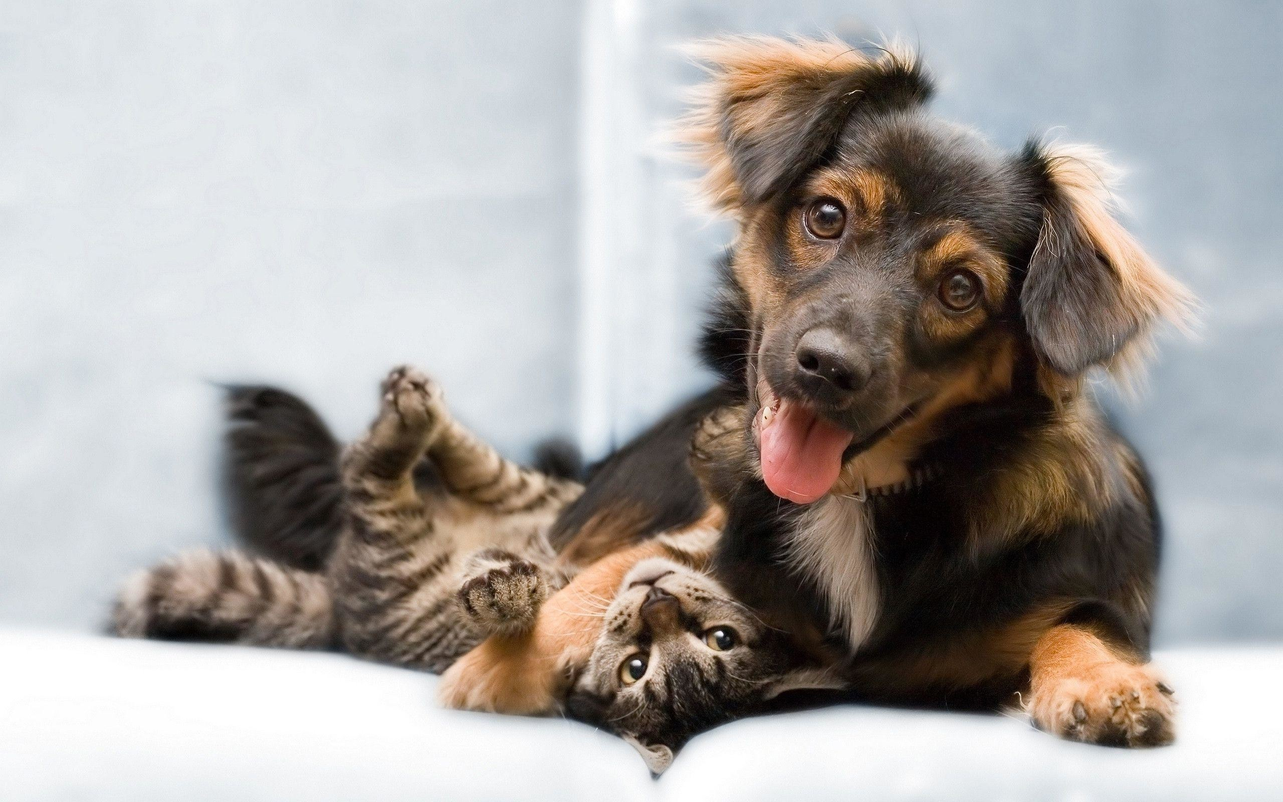Cat And Dog Wallpaper