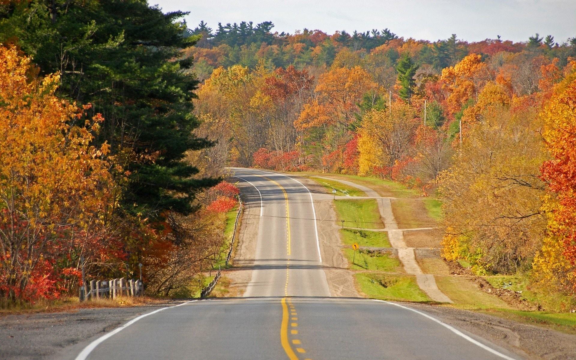 автомобиль осень лес дорога  № 3771472 бесплатно