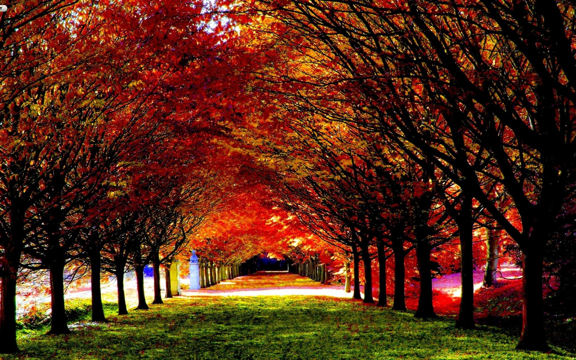 Autumn Wallpaper for Desktop ·① WallpaperTag