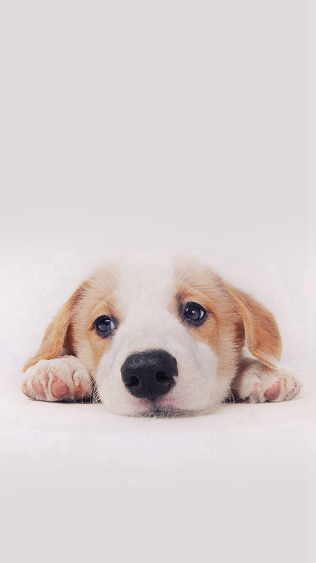 Cute Puppy Pictures Wallpaper ·① WallpaperTag