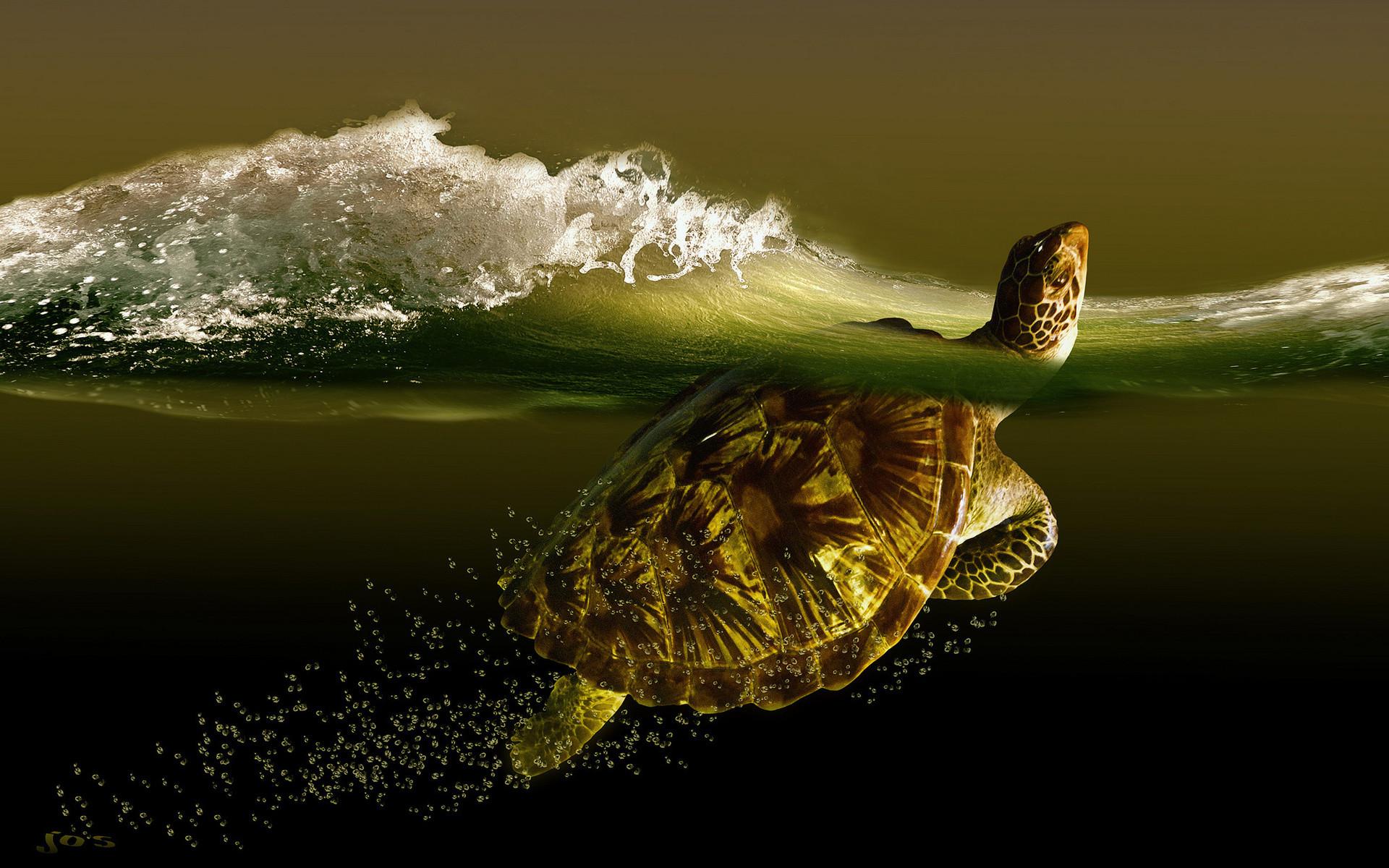 Обои для рабочего стола черепаха в воде