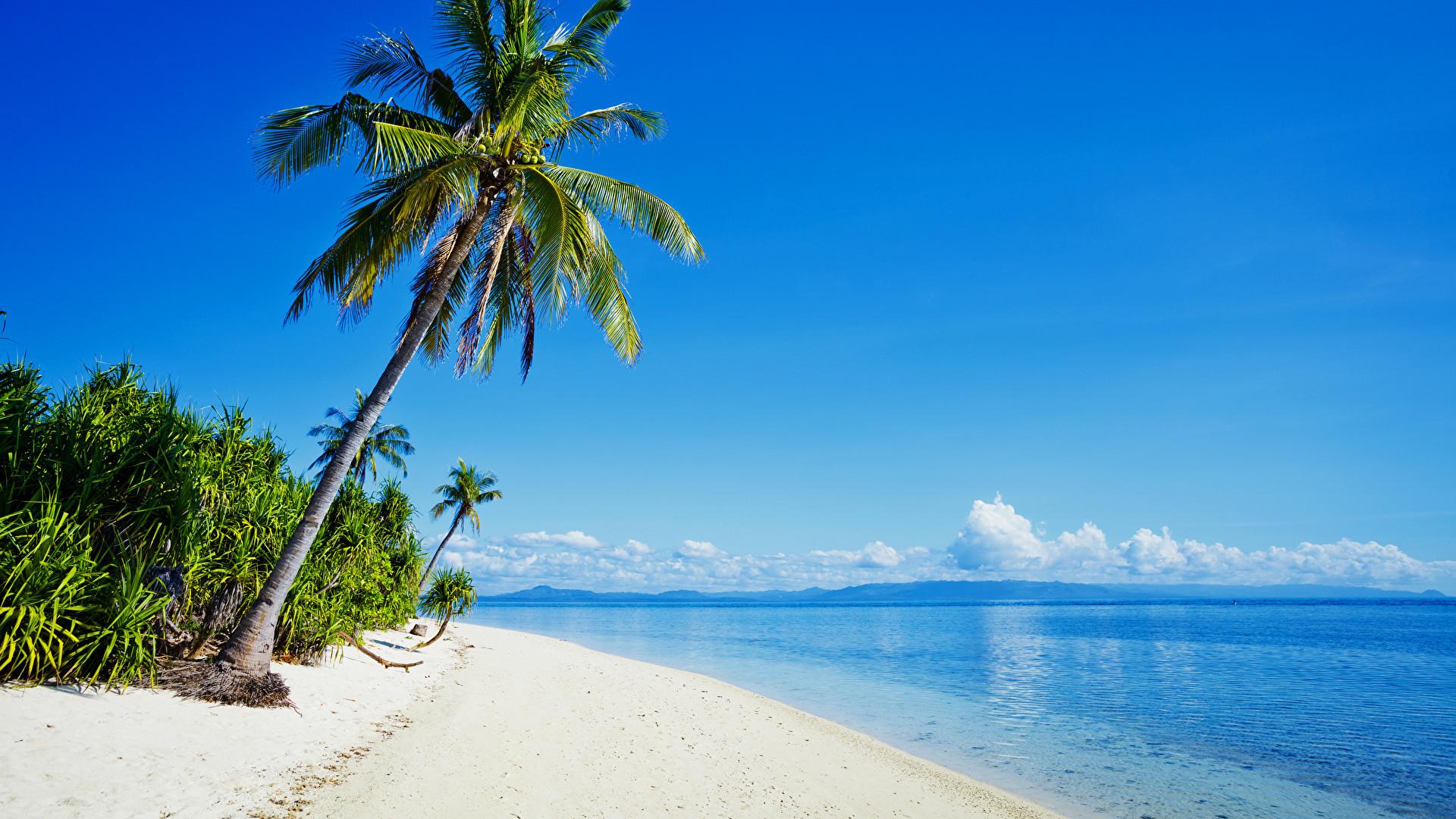 Shore Palms Tropical Beach 4k Hd Desktop Wallpaper For 4k: Tropical Wallpaper Desktop ·① WallpaperTag
