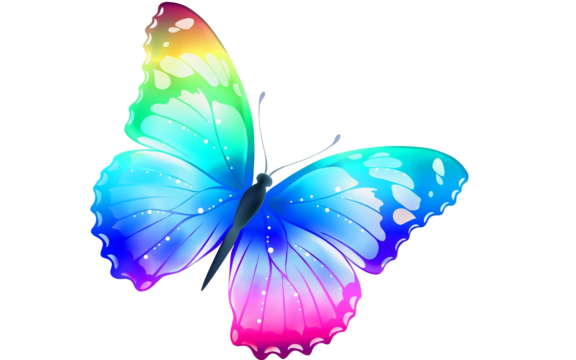 Beautiful Butterfly Wallpaper ·① WallpaperTag