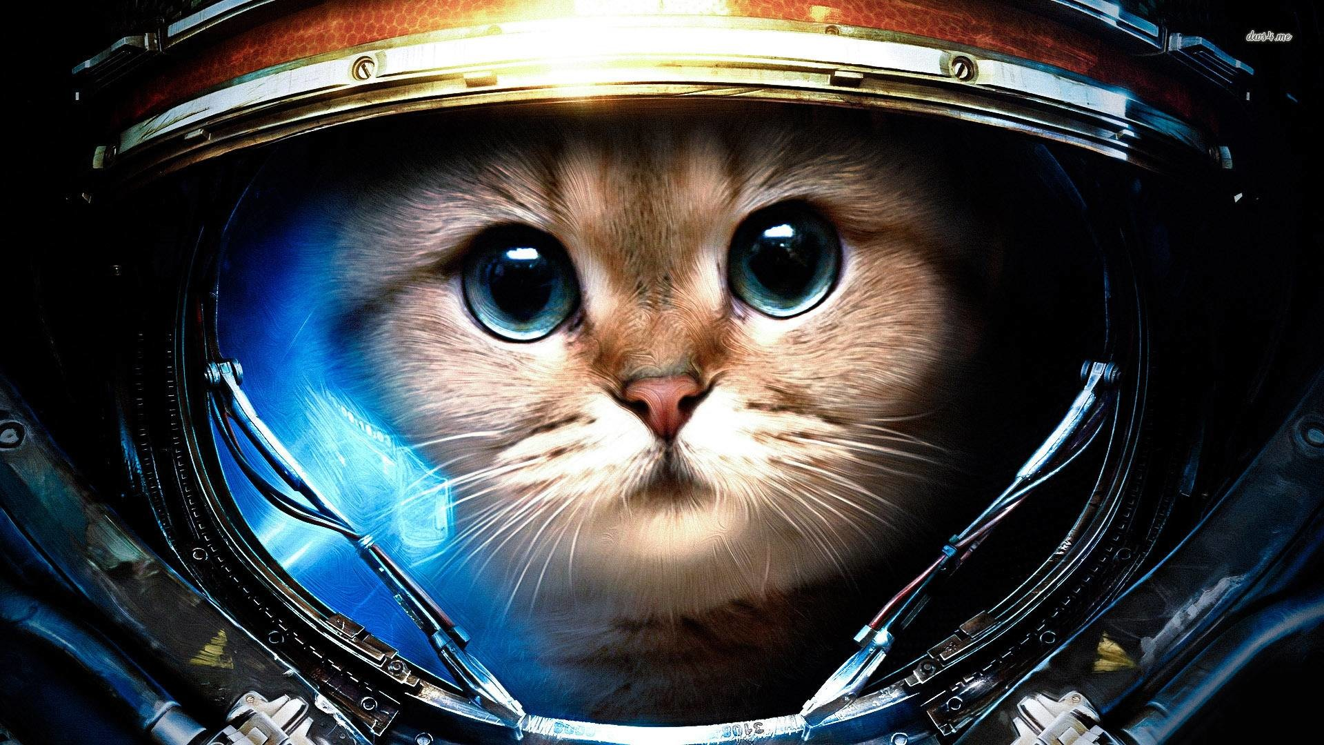 Cool Cats Wallpapers