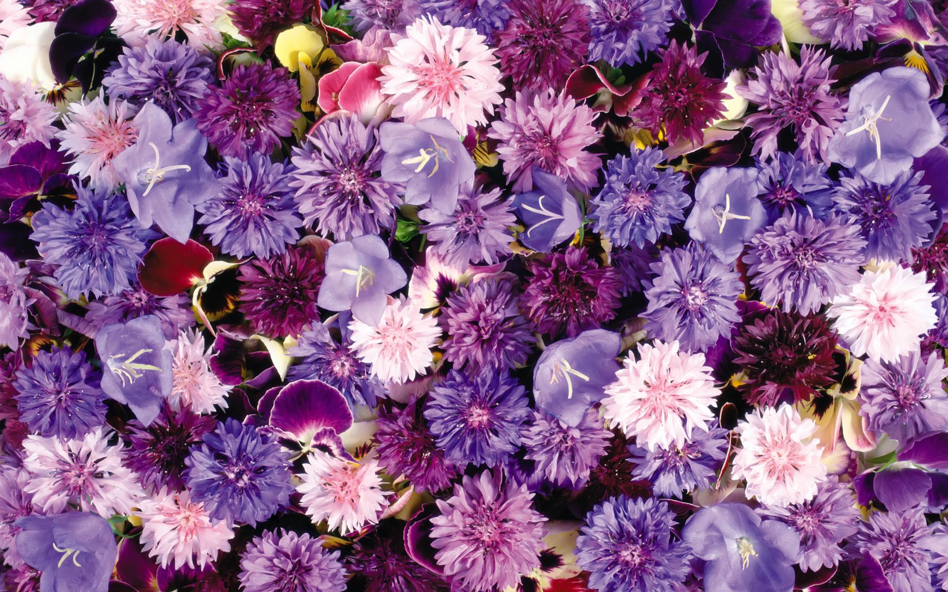 Black Floral Background Tumblr ·① WallpaperTag  Black Floral Ba...