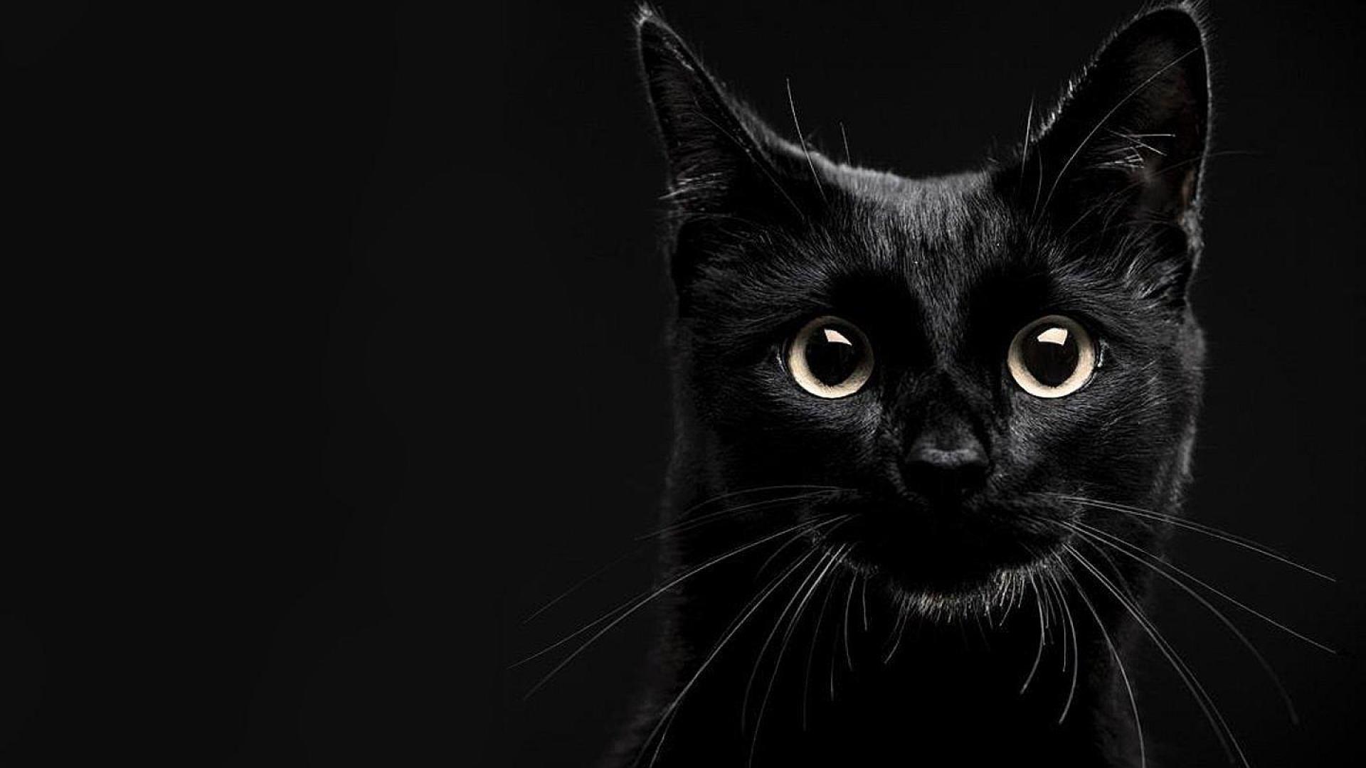 Black Cat Wallpaper Iphone 7 Best Hd Wallpaper
