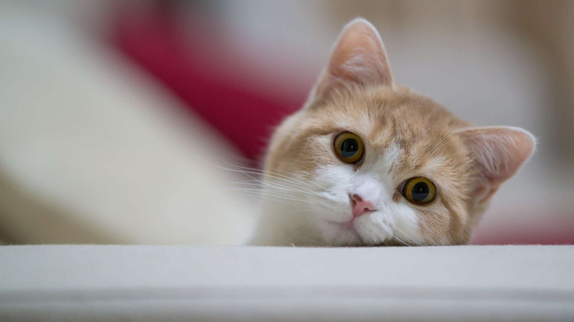60 Cat Wallpapers 1 Download Free Awesome Full HD For