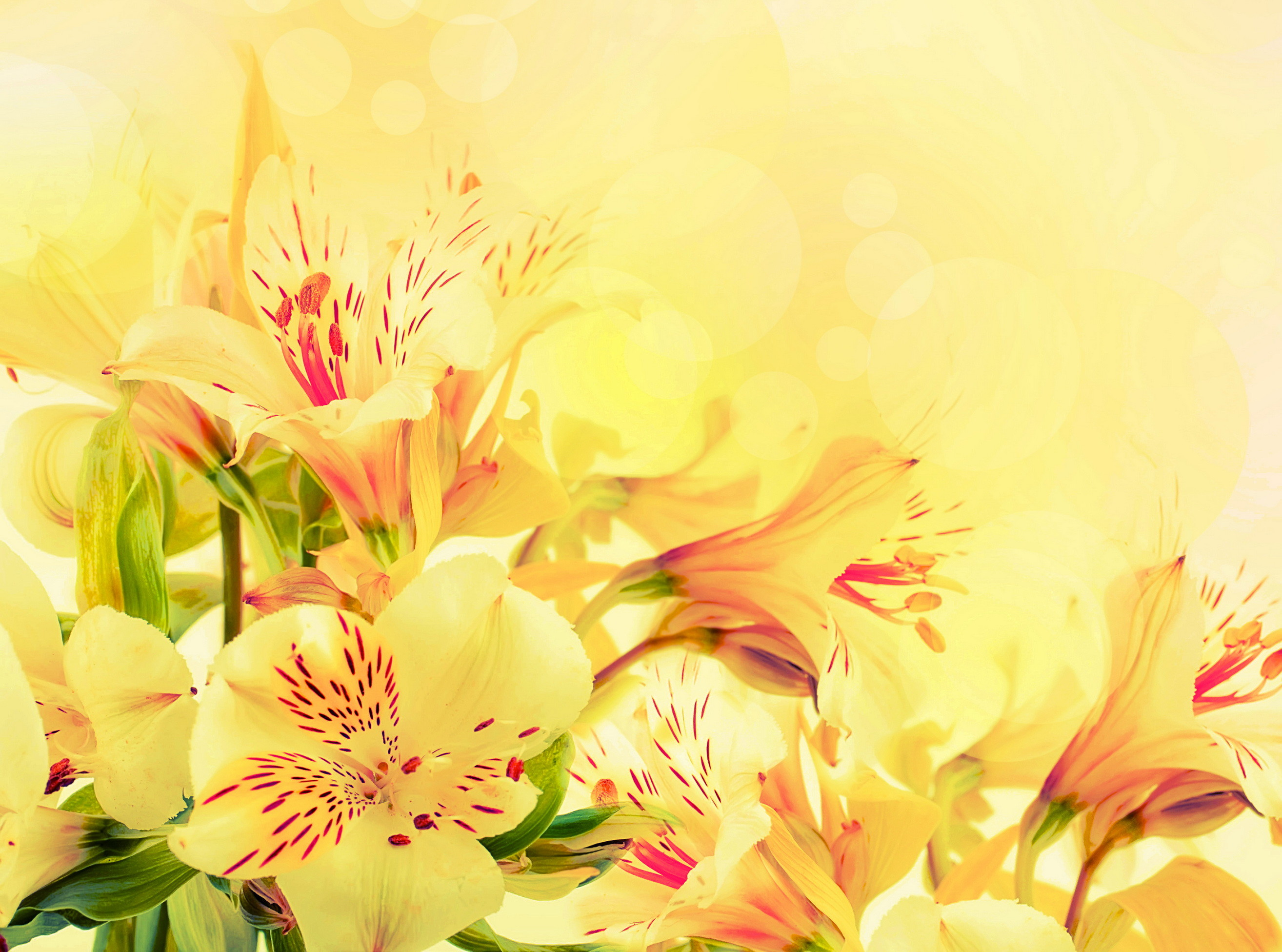 2628x1951 Yellow Flower Wallpaper HD Download Lovely