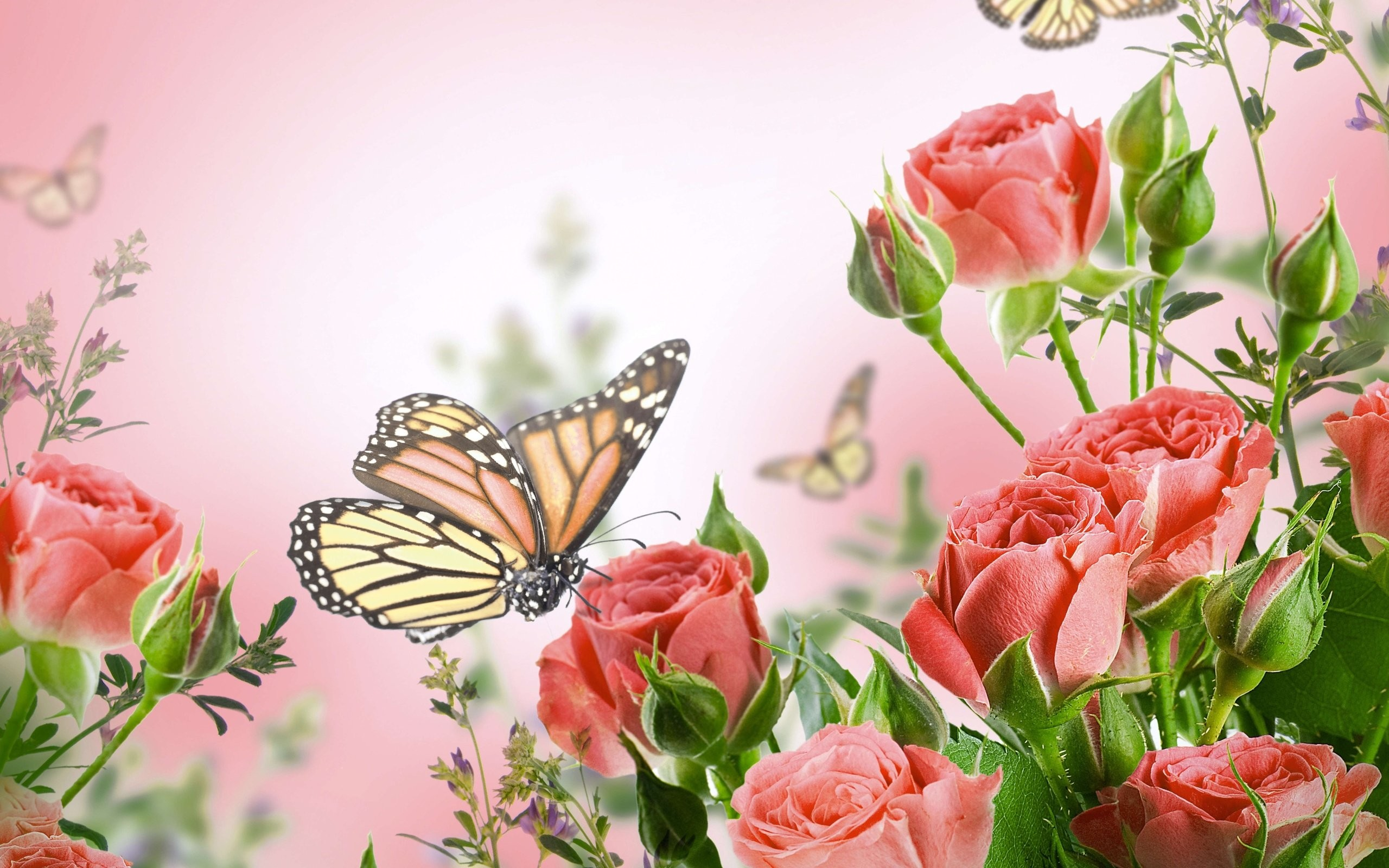 Butterfly and Flower Wallpaper ·① WallpaperTag