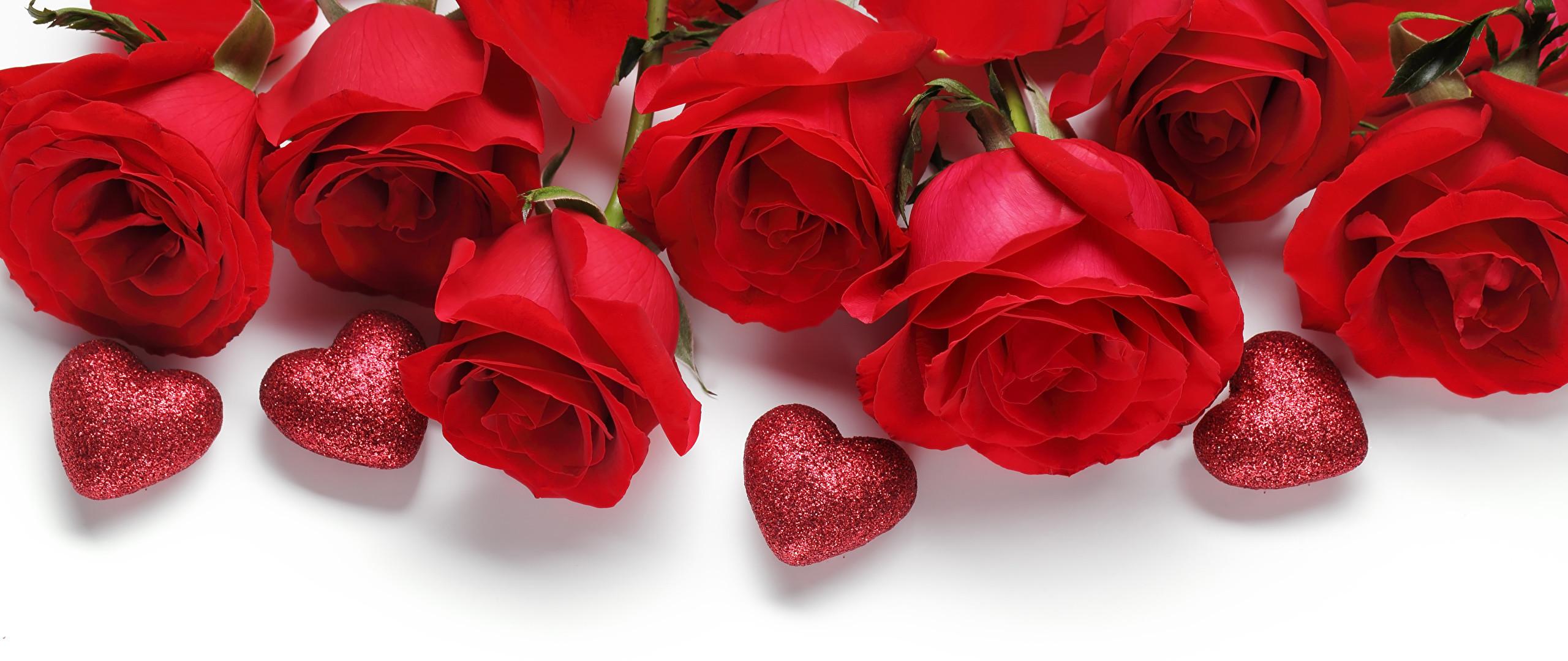 red rose flower background 183��