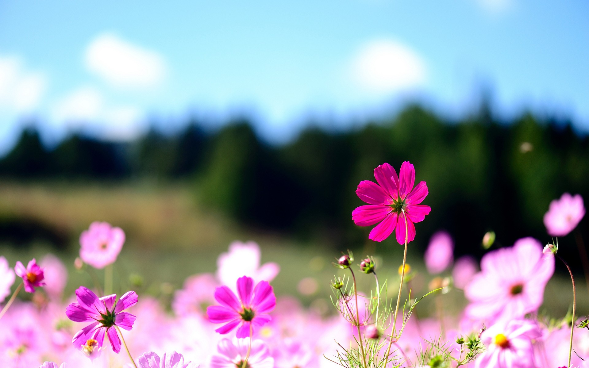 Floral Desktop Wallpaper Download Free Cool Full Hd Wallpapers