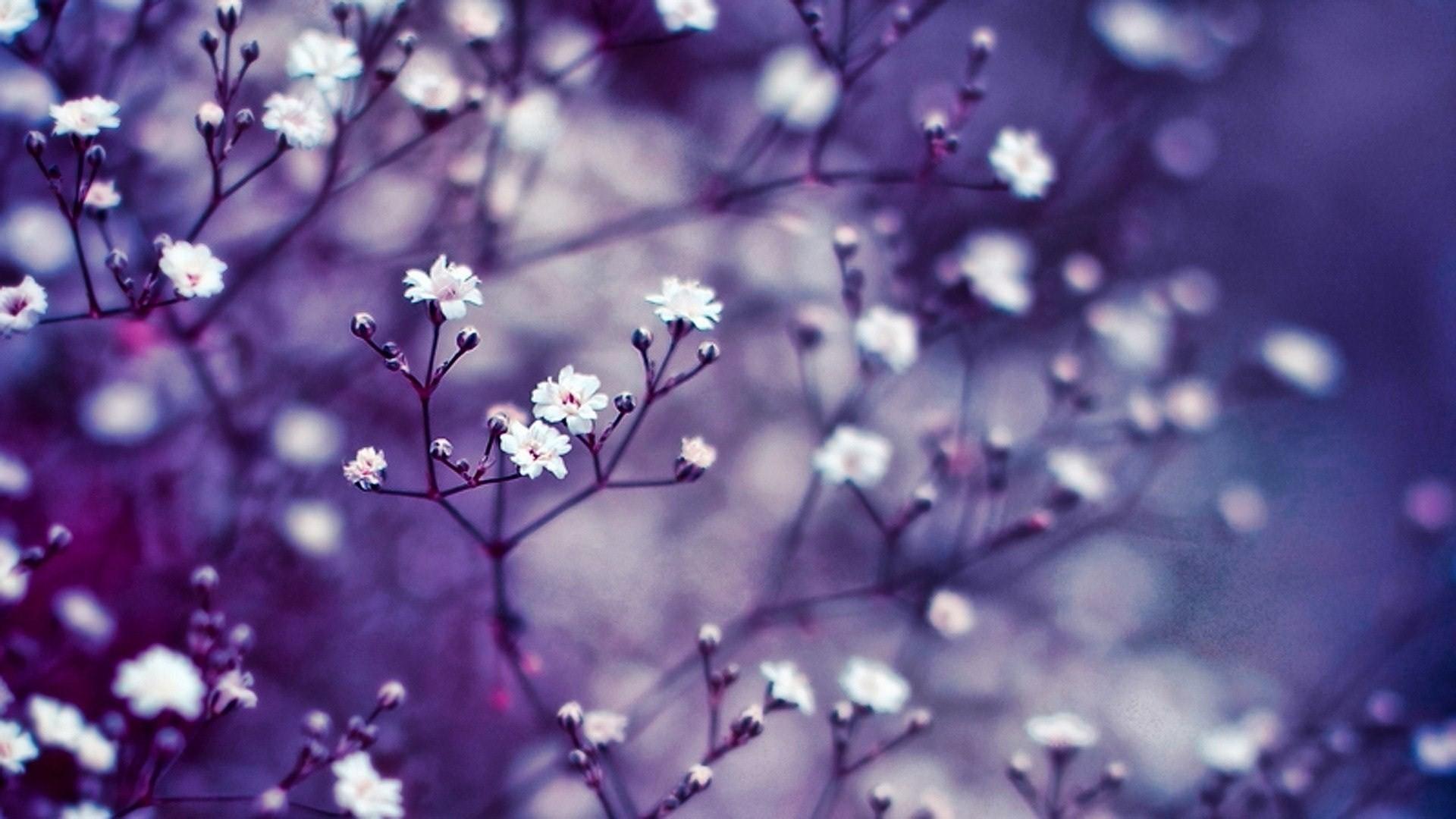 wallpaper flowers ·①