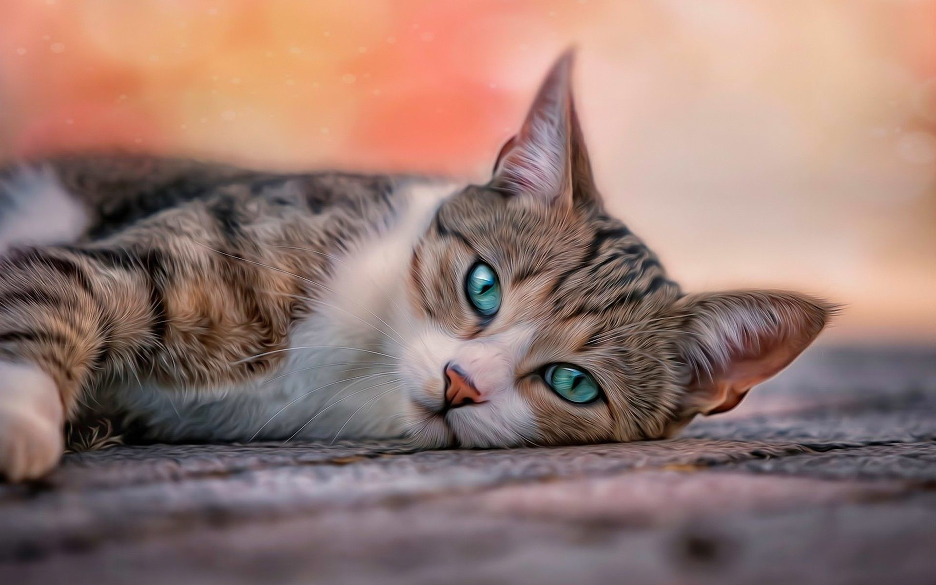 Cat wallpaper ·① Download free stunning backgrounds for ...