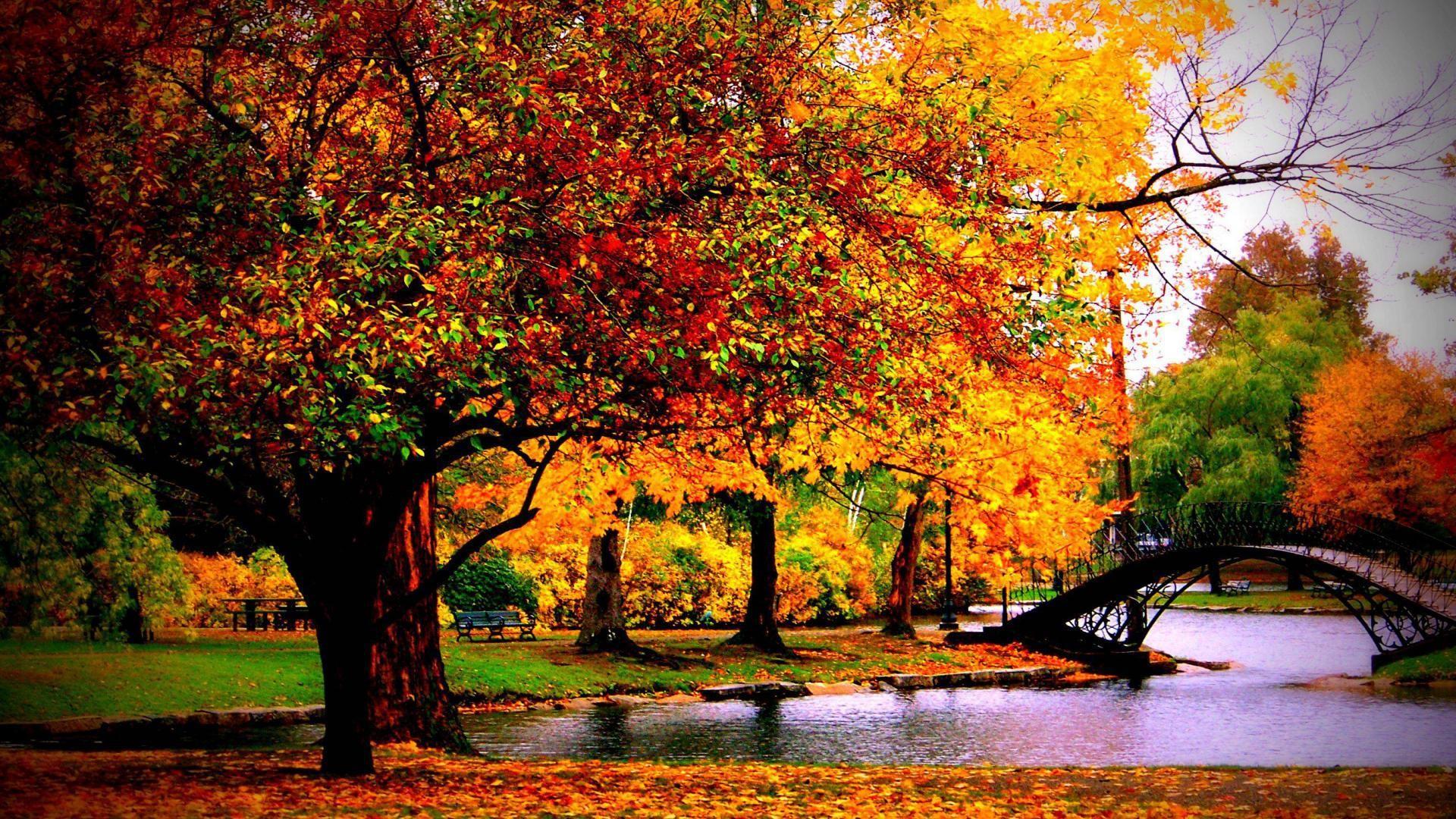 fall autumn wallpaper ·①