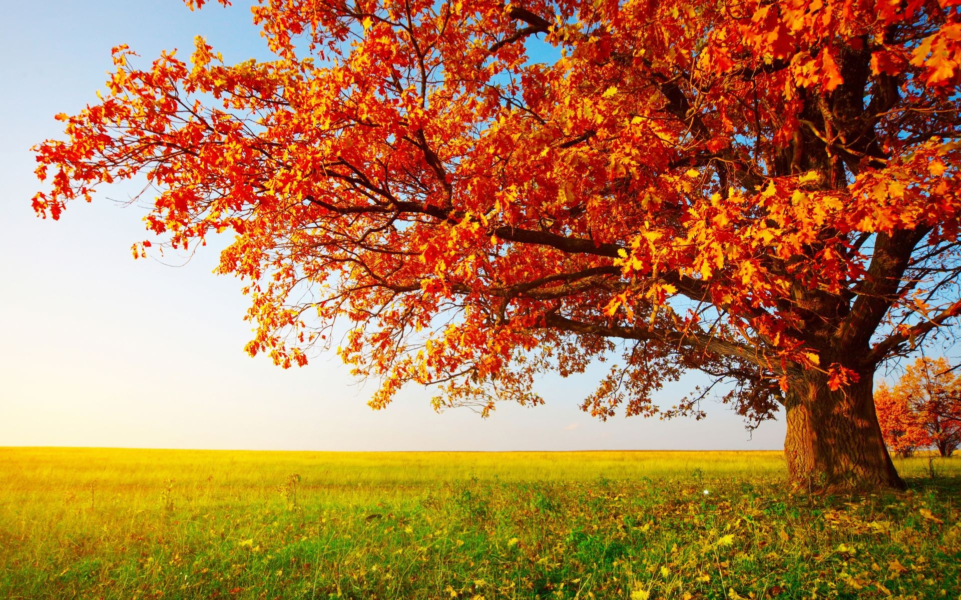 Autumn wallpaper Widescreen Download free amazing High