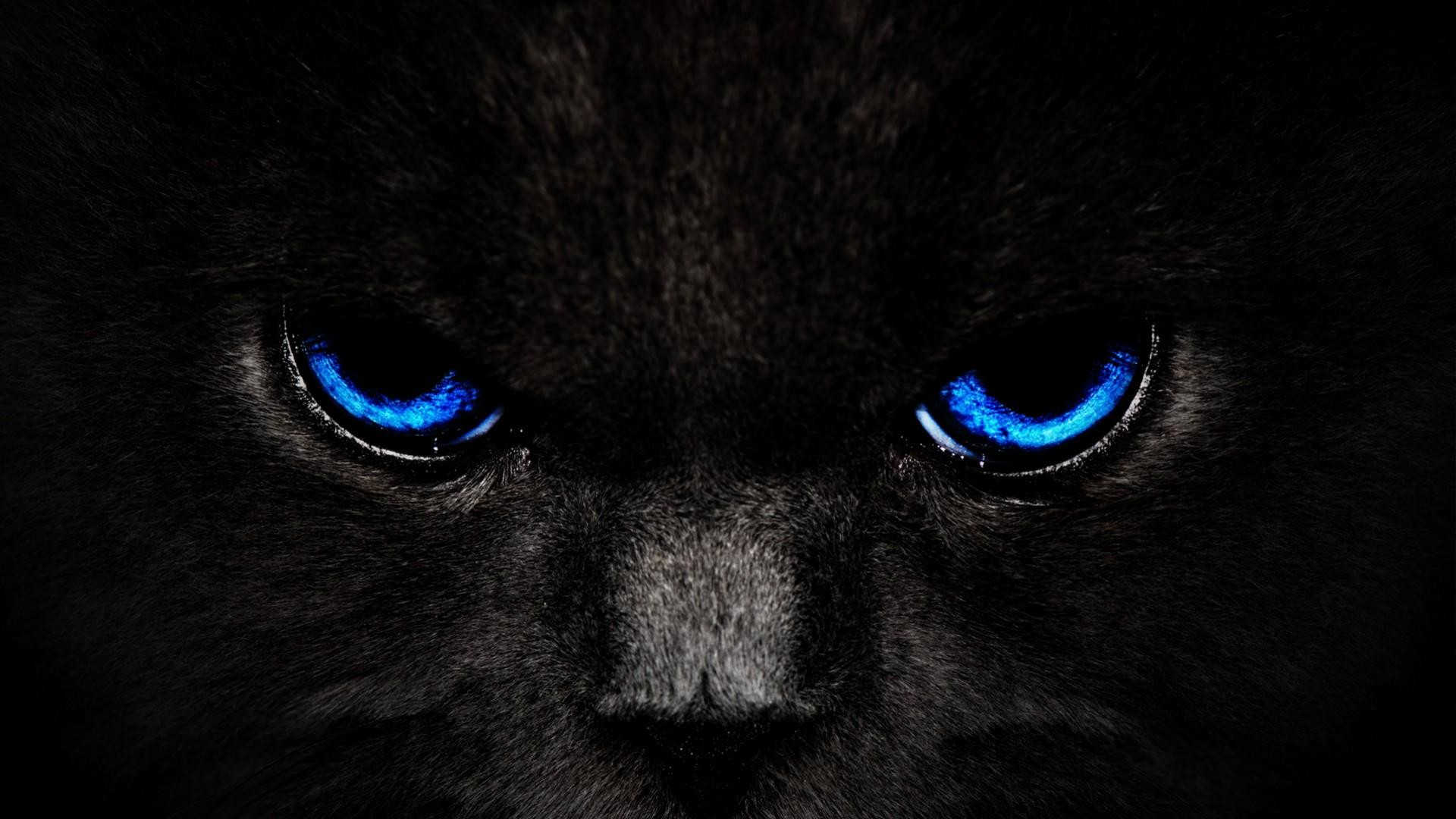 Black wallpaper hd download free stunning hd wallpapers for 1920x1080 black wallpapers cat jpg voltagebd Image collections