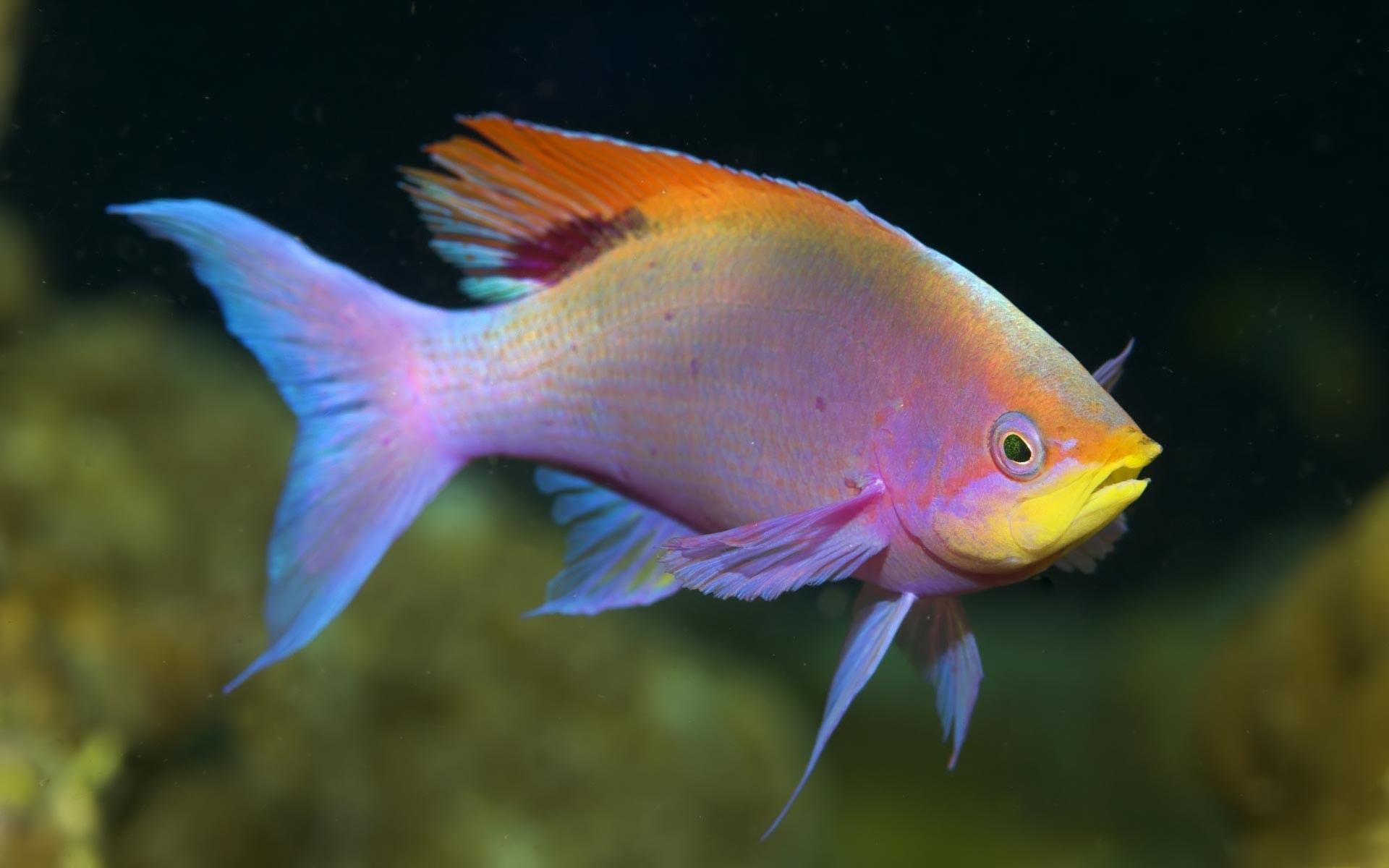 Cool fish backgrounds for Cool tropical fish