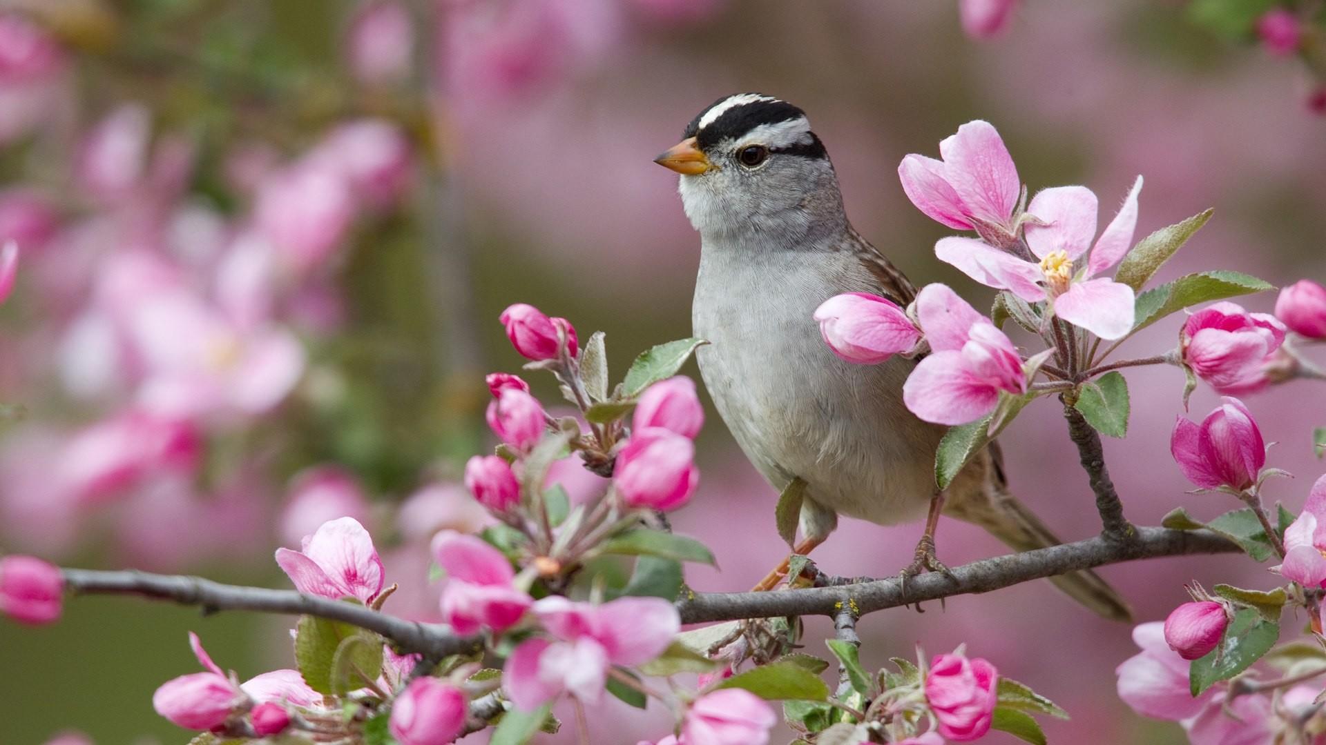 природа птицы животные весна  № 290711 без смс