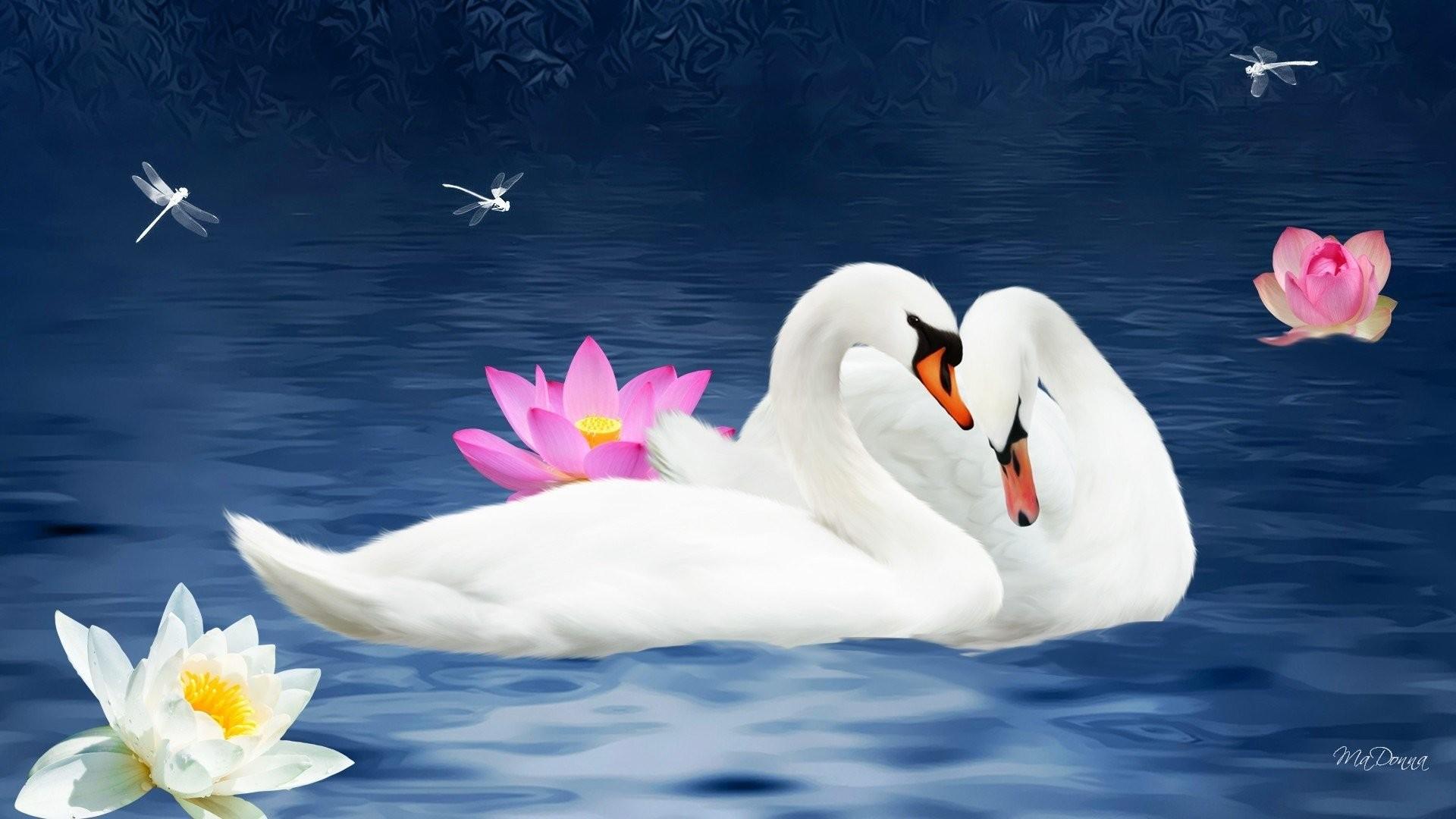Lovely birds wallpaper wallpapertag - Swan wallpapers for desktop ...