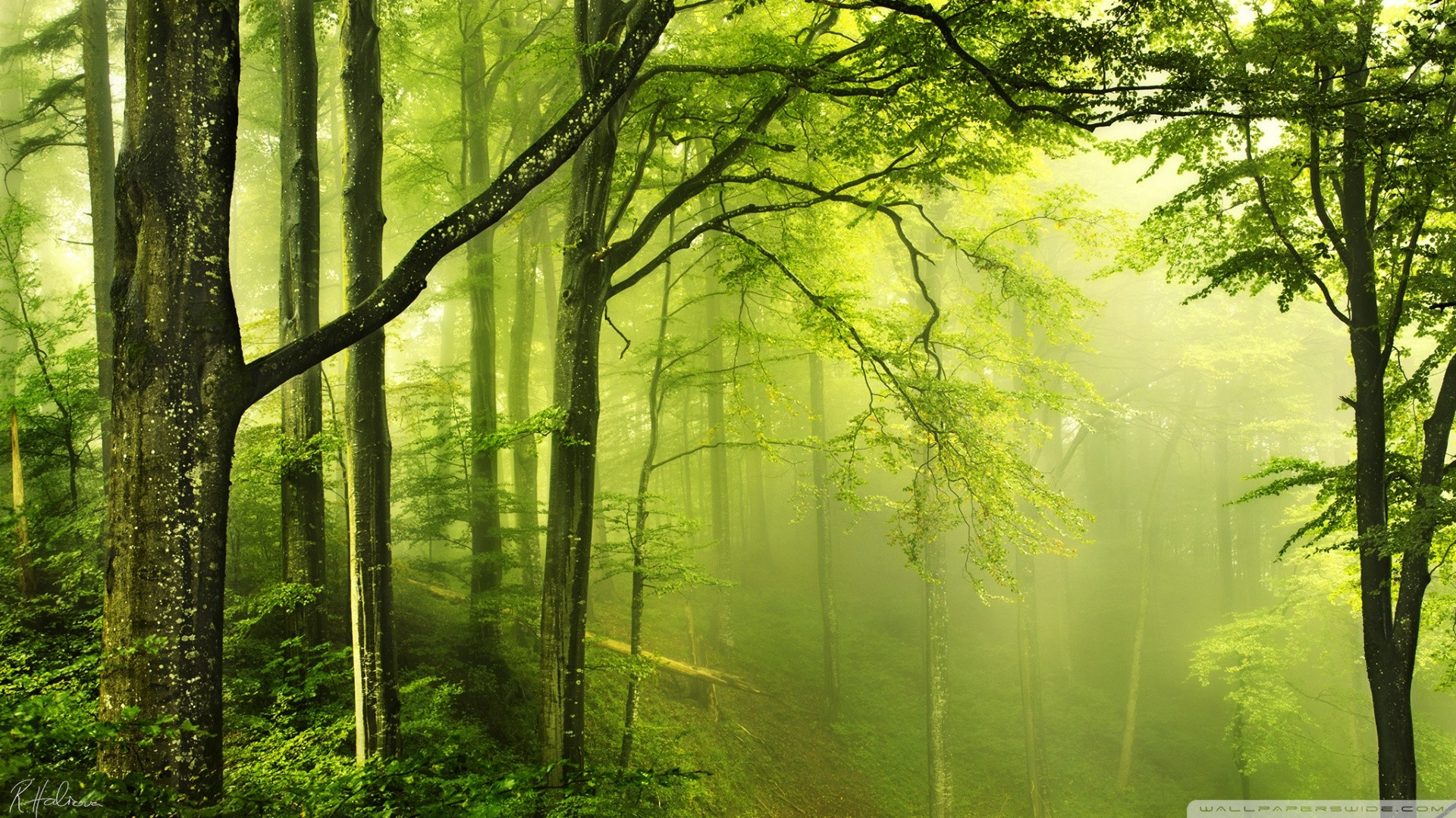 green forest wallpaper ·①