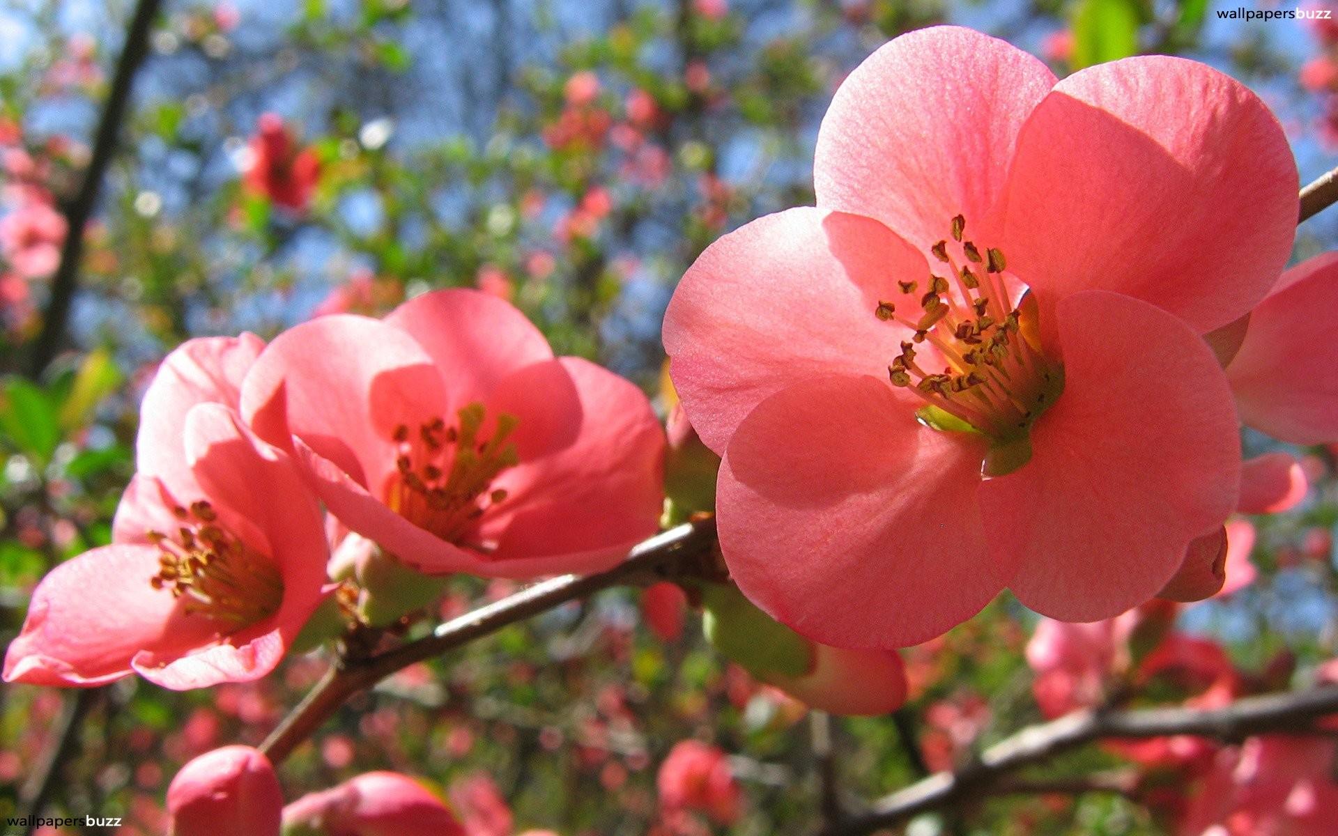 Spring Flower Tulips PPT Backgrounds