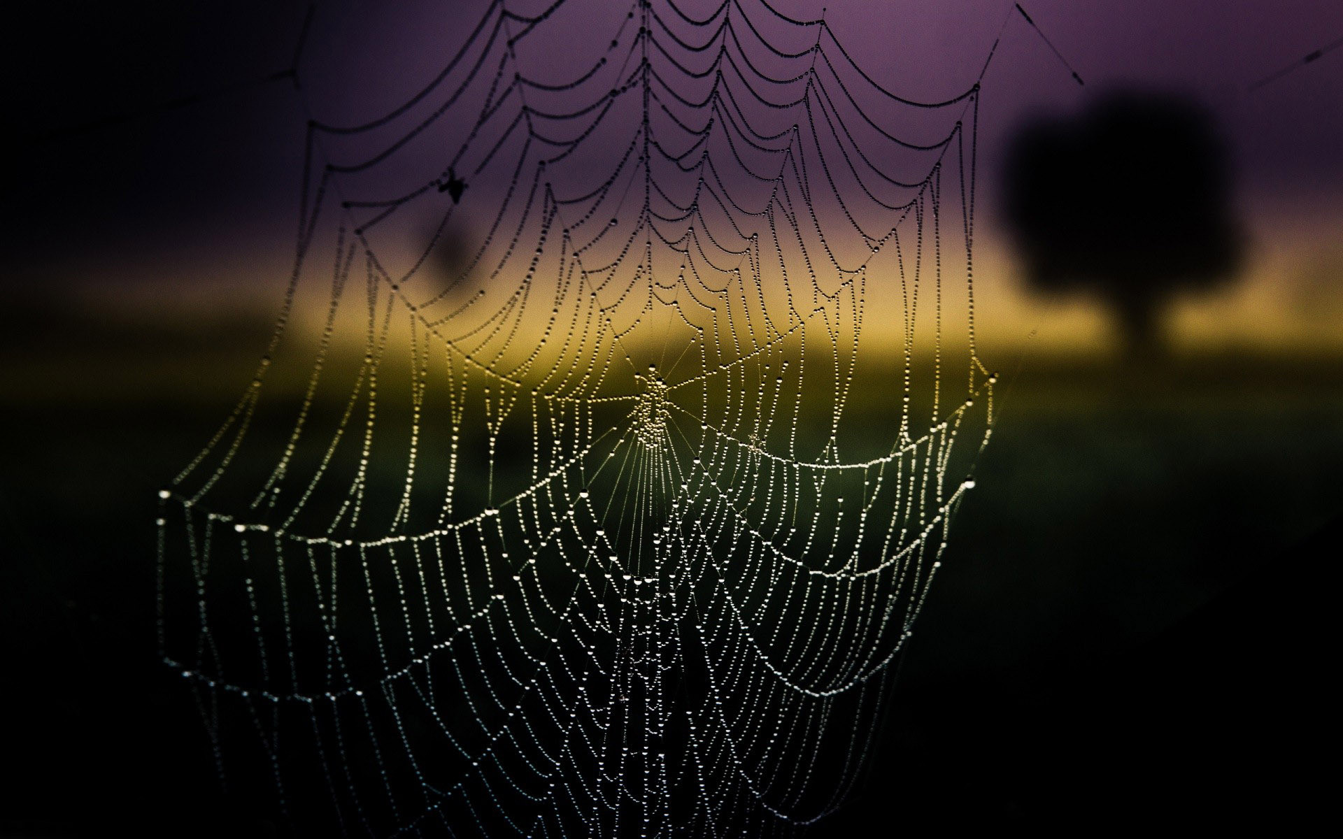 1920x1200 Amazing Spider Web Wallpaper 41576 Download HD