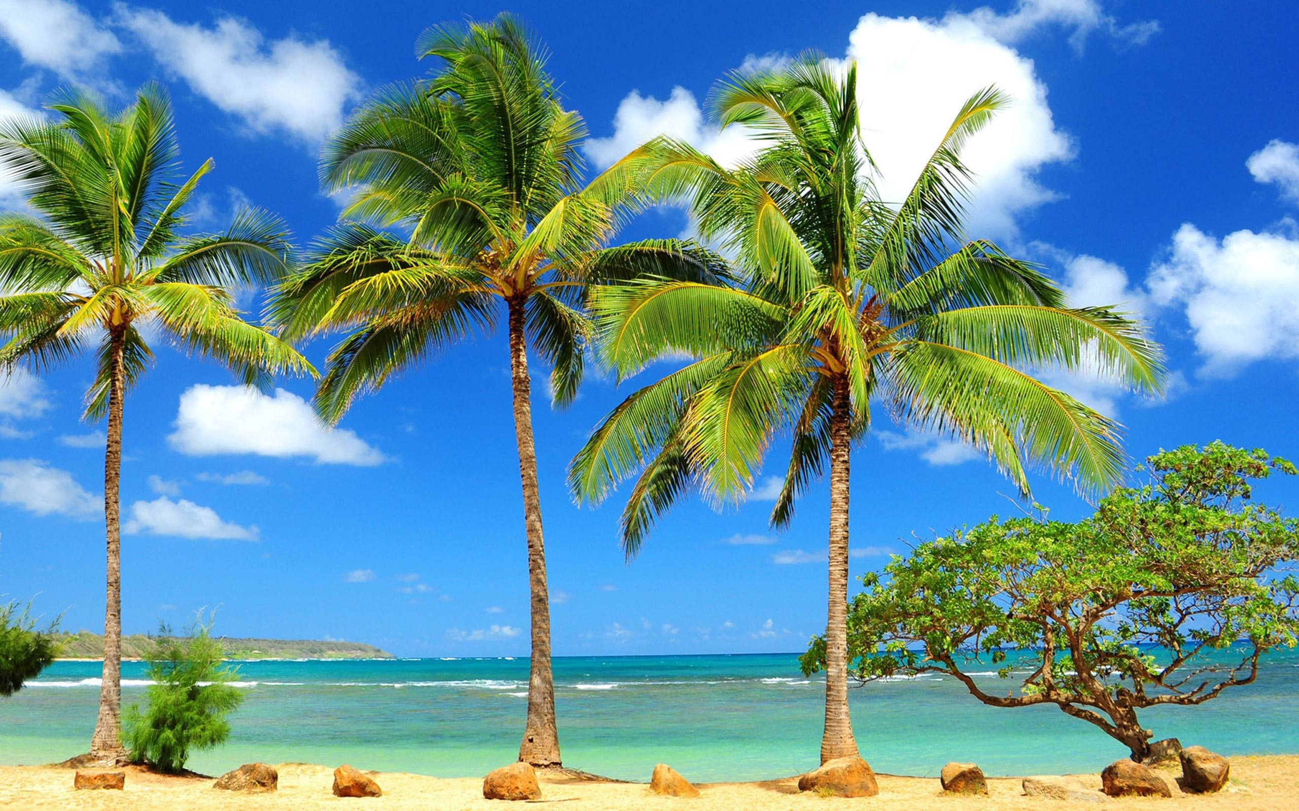 palm tree background  â free hd backgrounds for desktop