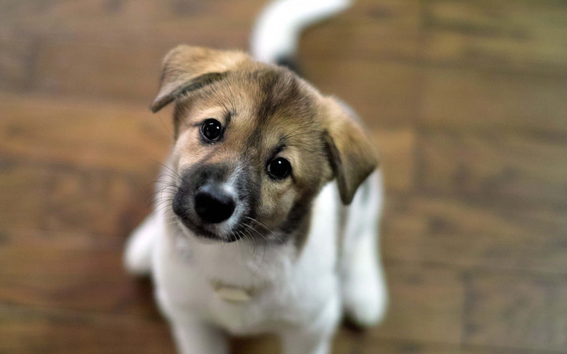 Cute Puppy Wallpapers ·① WallpaperTag