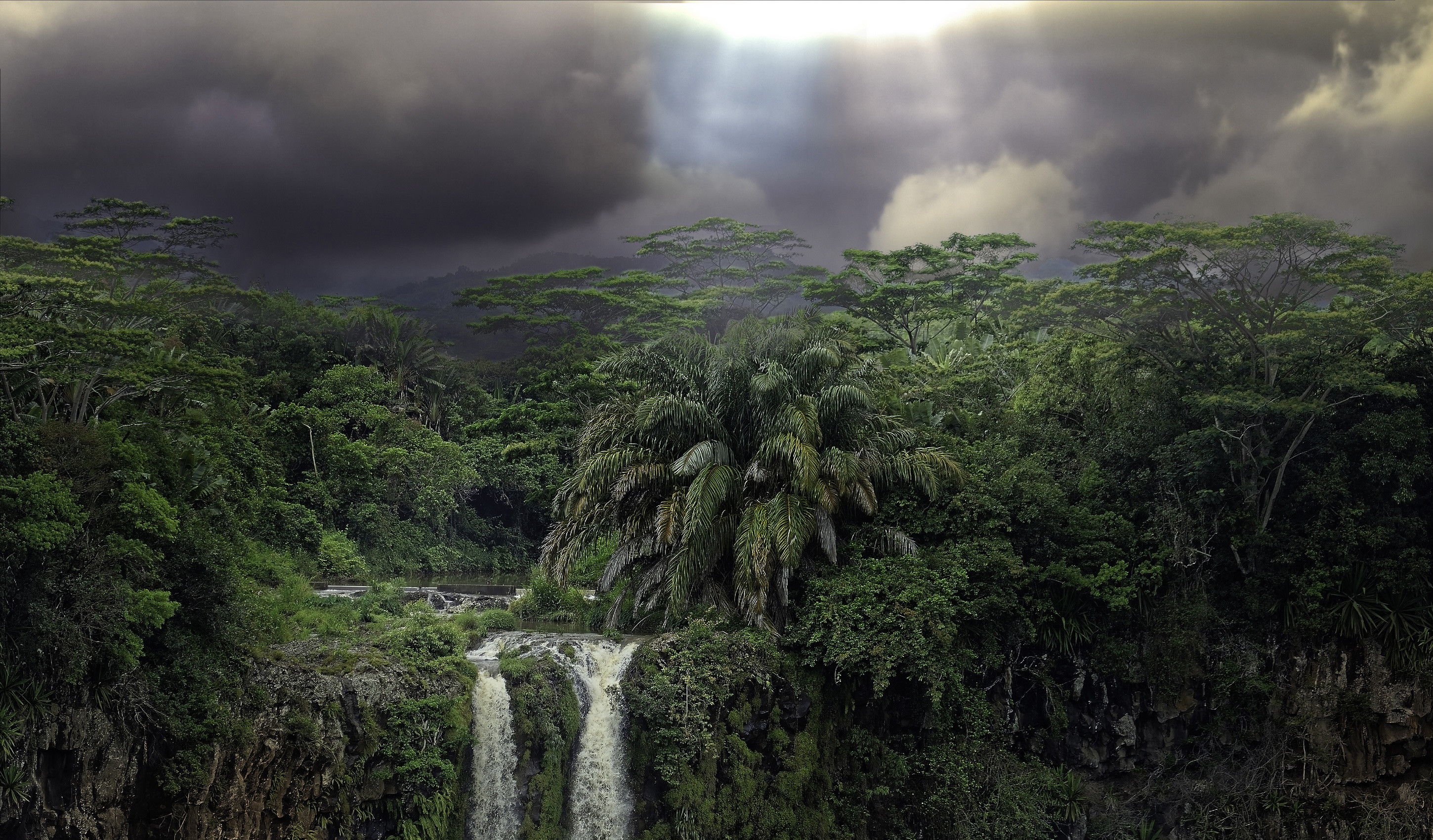 Tropical RainForest Wallpaper 1