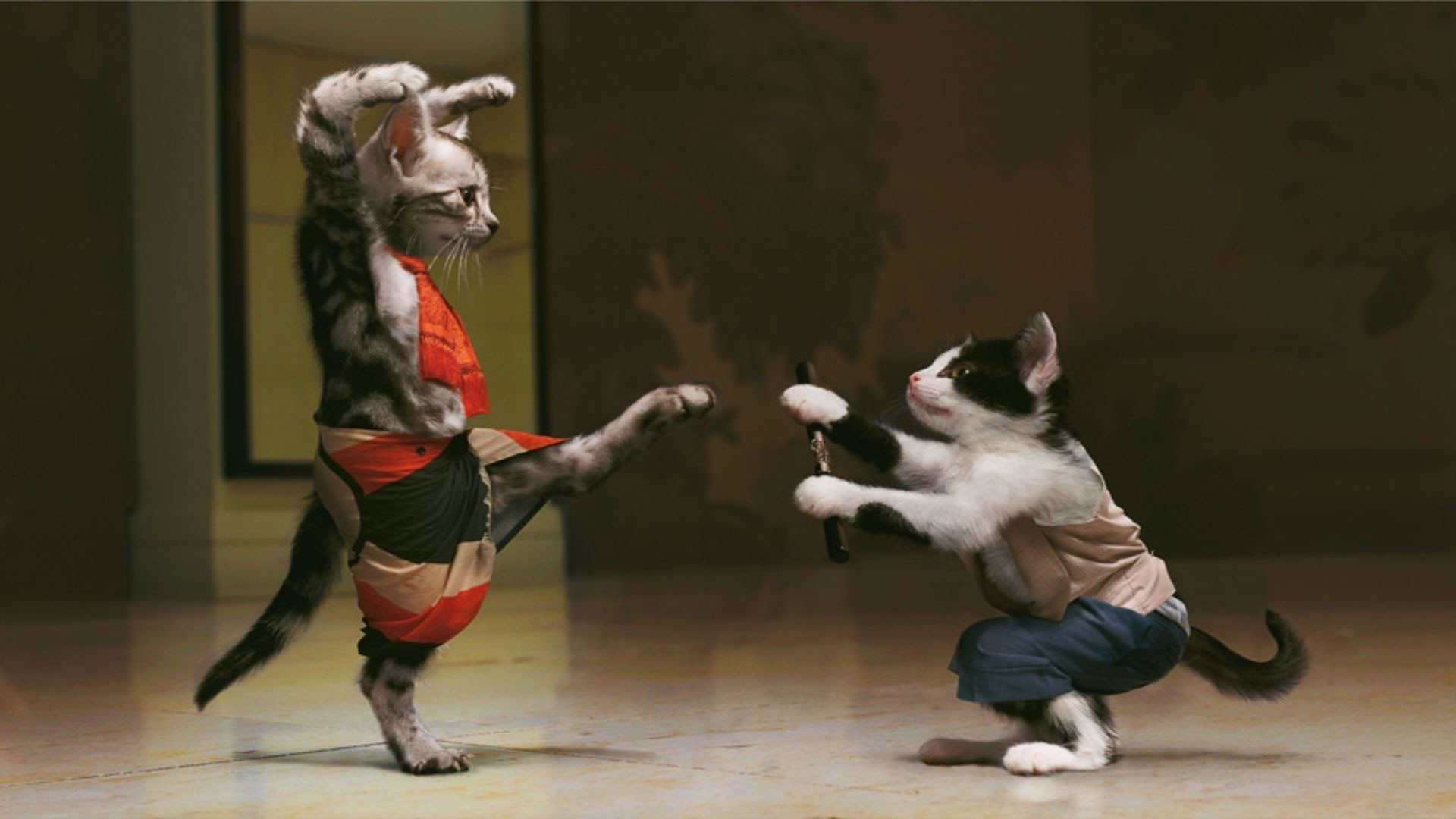 1920x1080 Hd Pics Photos Attractive Funny Cat Martial Arts Fighting Quality Desktop Background Wallpaper Download A Few HD Wallpapers