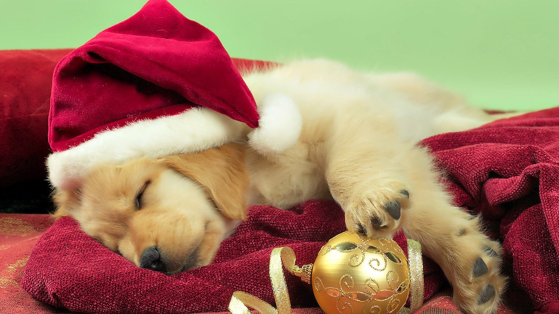 Puppy Christmas Wallpaper ①