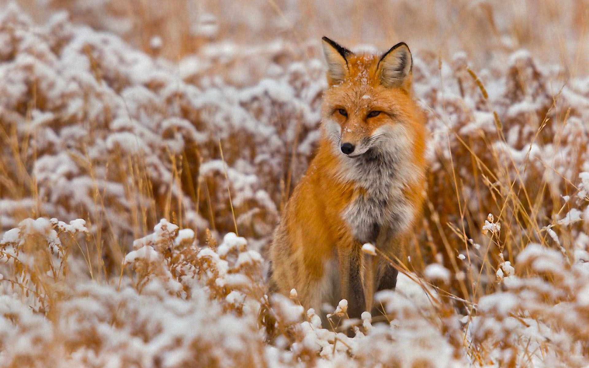 Animal Desktop Backgrounds ①
