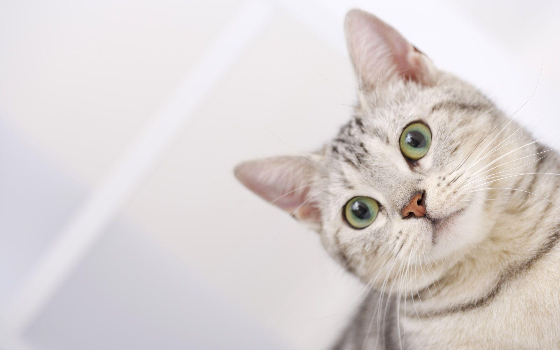 Desktop Wallpaper Cats ·① WallpaperTag