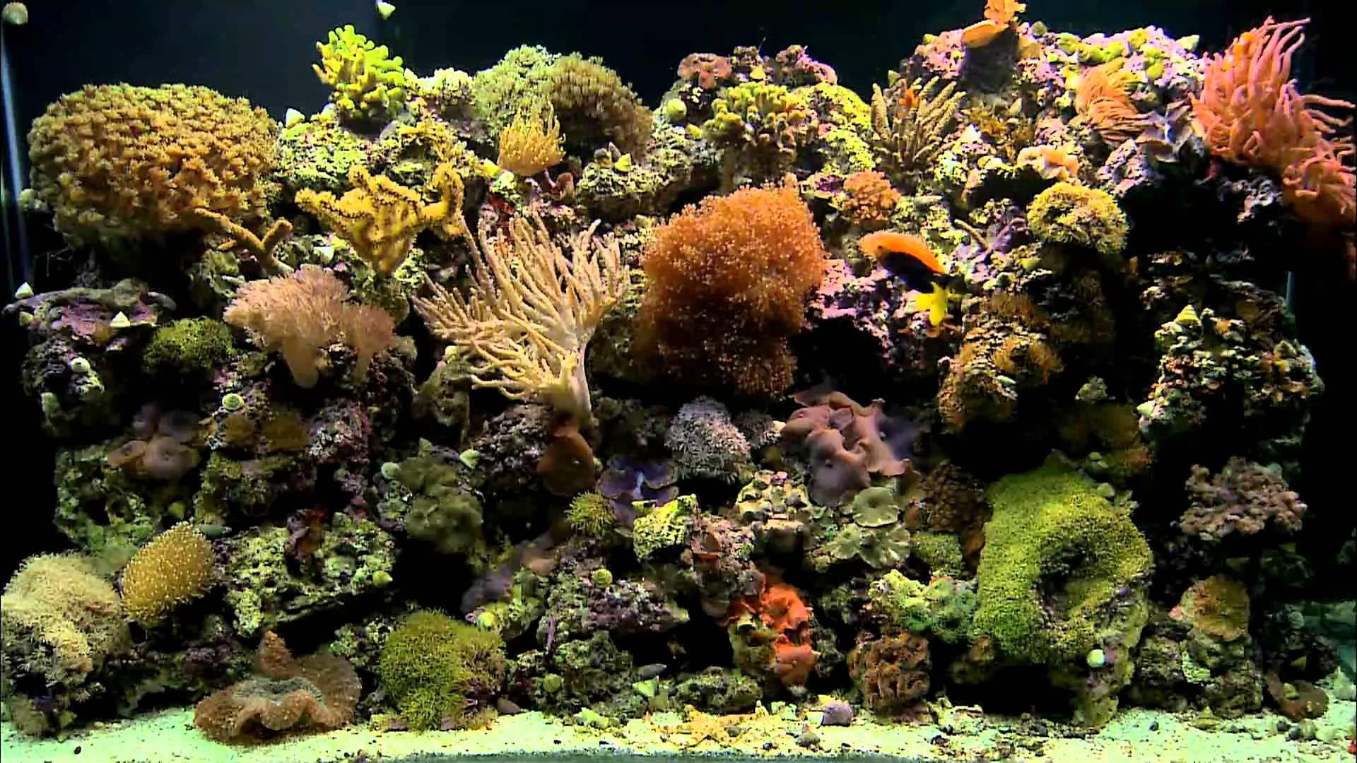 Aquarium background ·① Download free wallpapers for ...