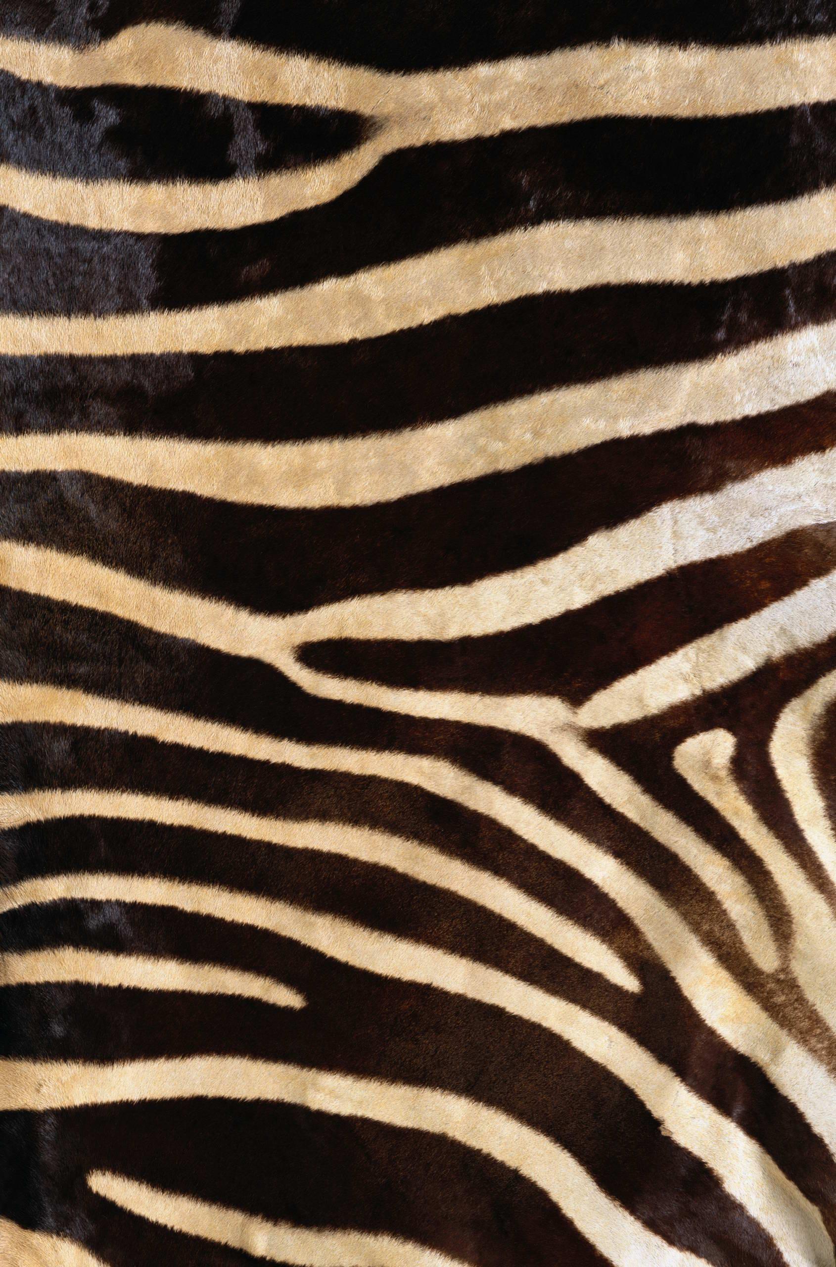 zebra background 183�� download free stunning hd wallpapers